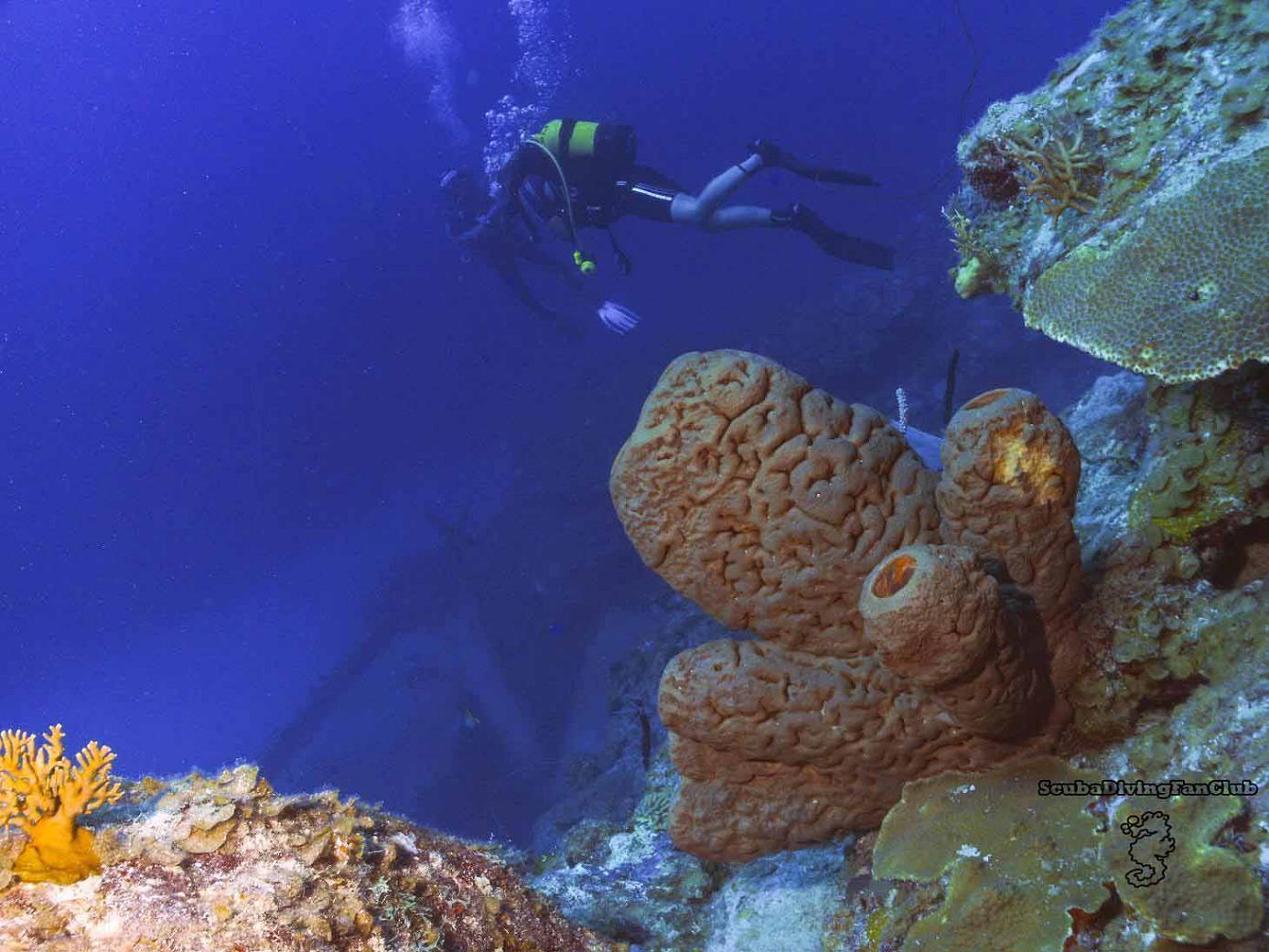 scuba diving wallpaper wallpapers - photo #21
