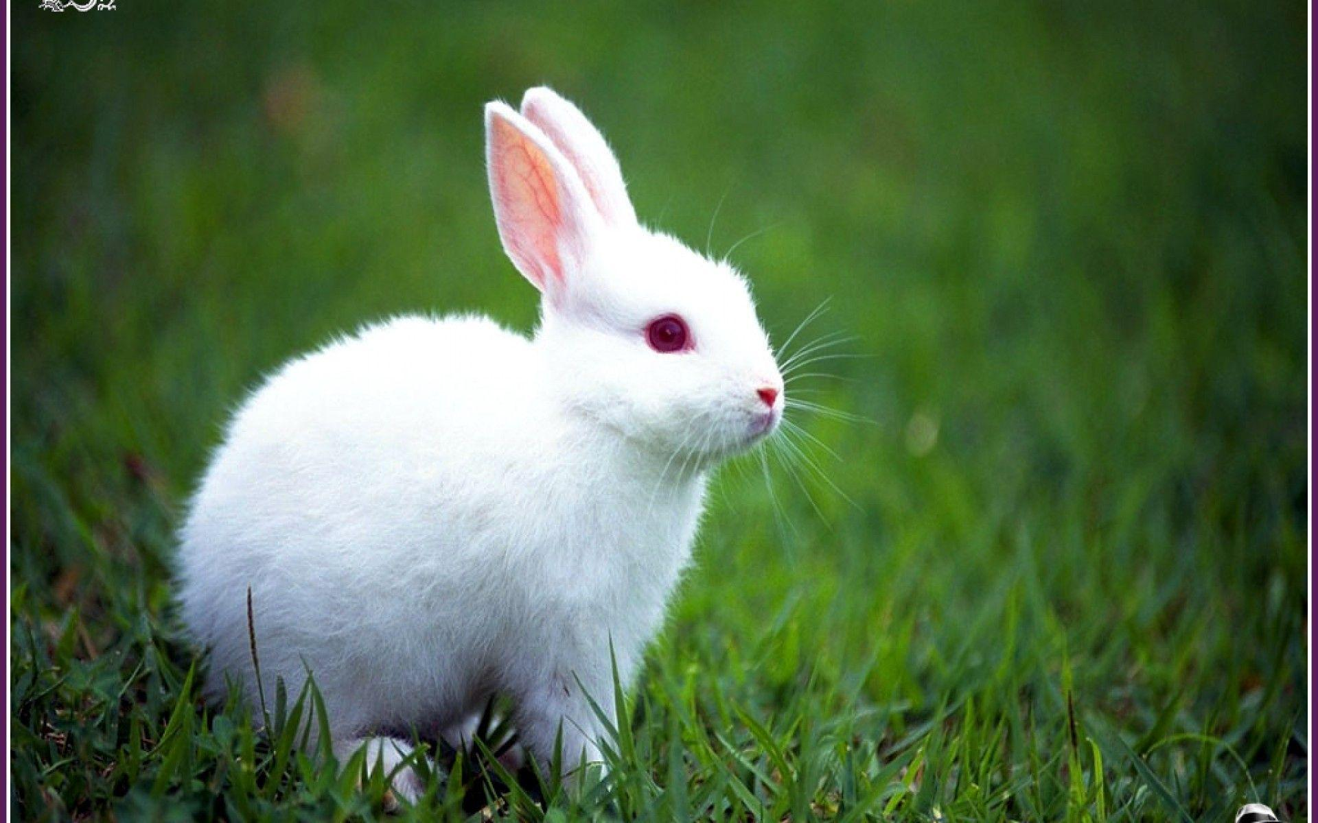 Rabbit Wallpapers