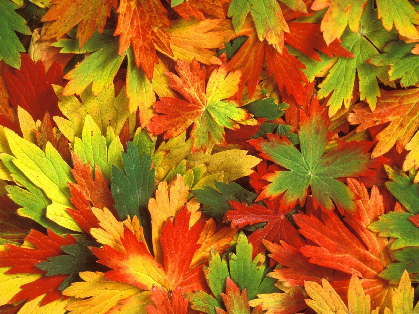 Fall Leaf Wallpaper 3D Colors Of Fall Wallpapers HD Wallpapers ...