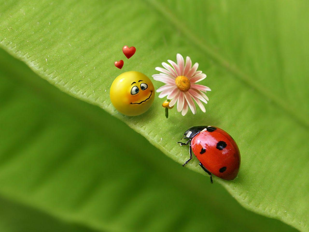 <b>Ladybug</b> Humor <b>Wallpapers</b> | WallpapersIn4k.net