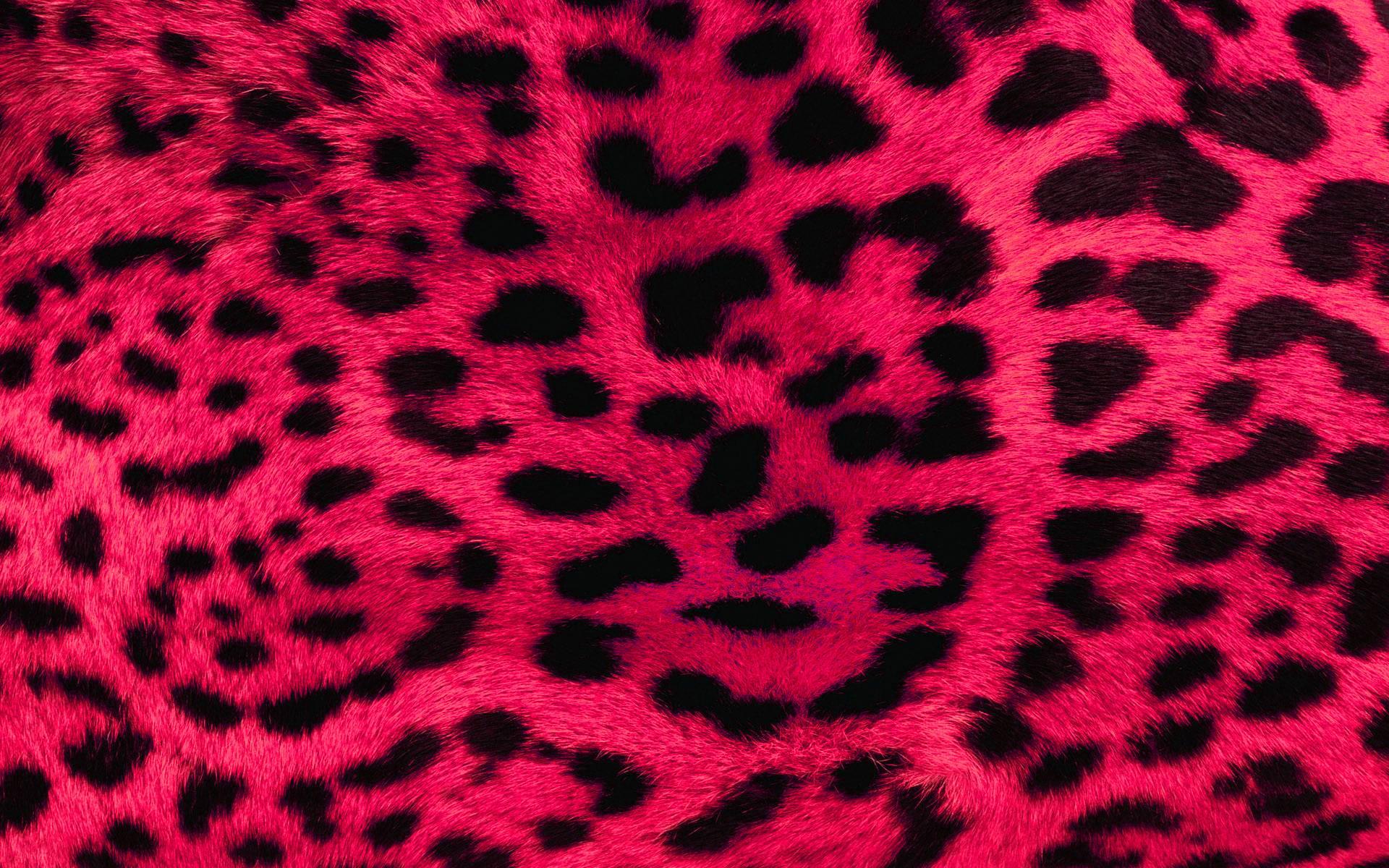Leopard Print Wallpaper Best Of Full Hd P Neon Wallpapers Desktop Backgrounds X