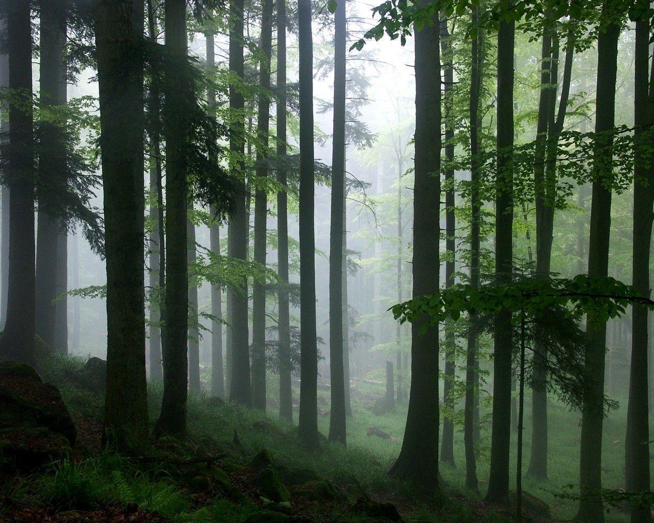 rainforest hd desktop wallpapers - photo #18