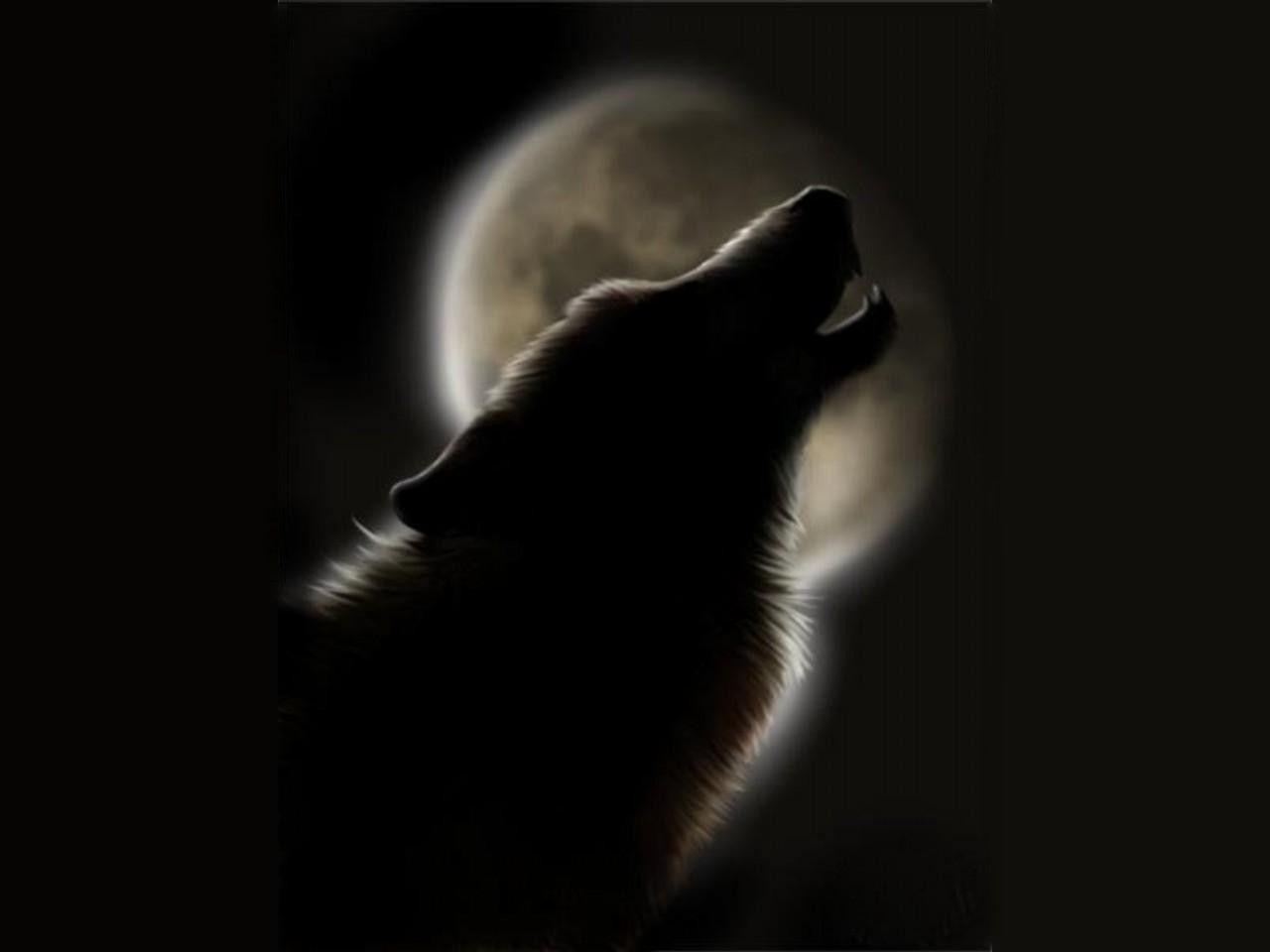 black wolf howling wallpaper - photo #9
