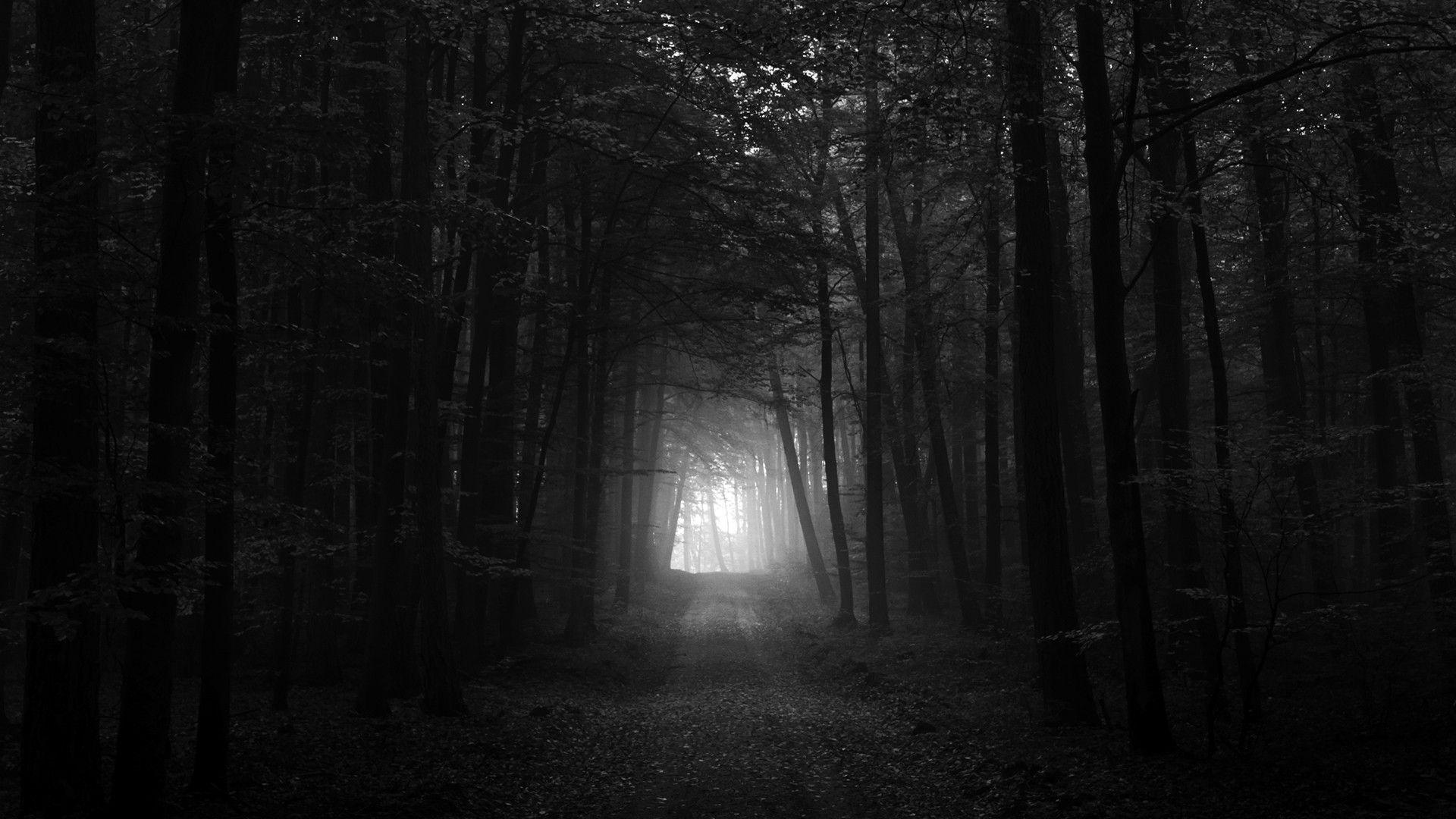 Black And White Dark Forest HD Wallpaper 1920x1080