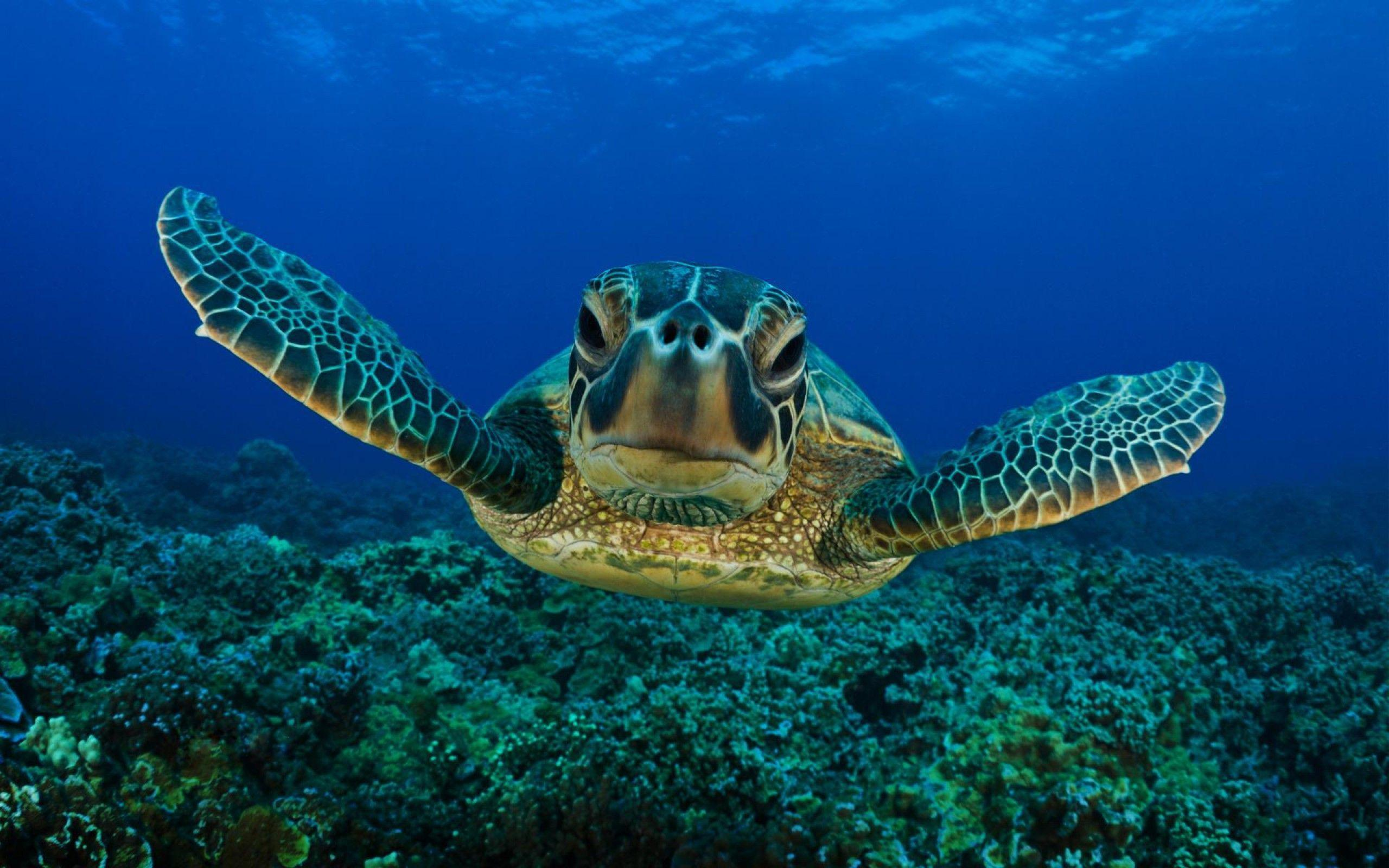 Pix For > Cute Turtle Wallpapers Hd