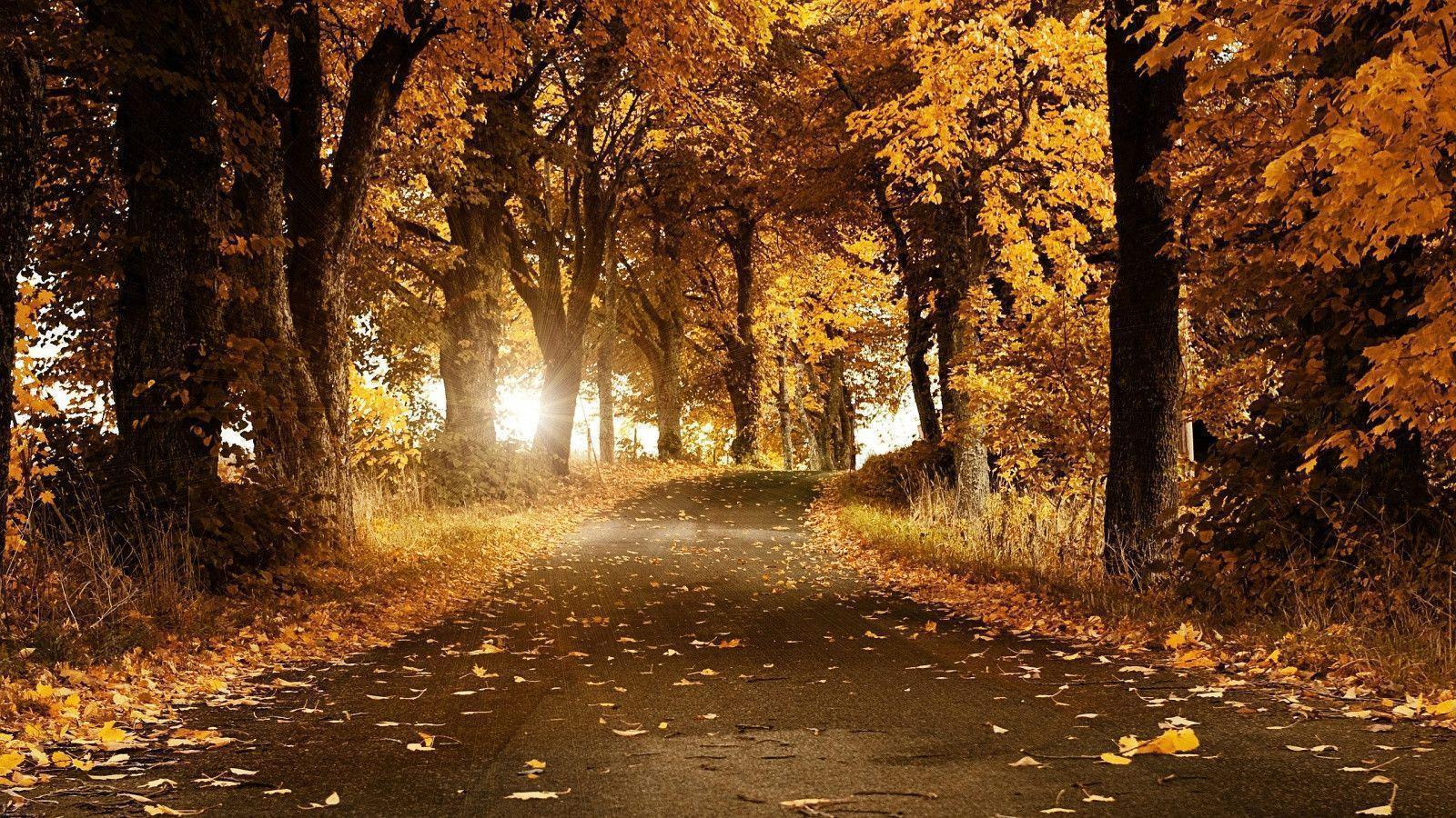 Autumn Forest Wallpapers Wallpaper Cave