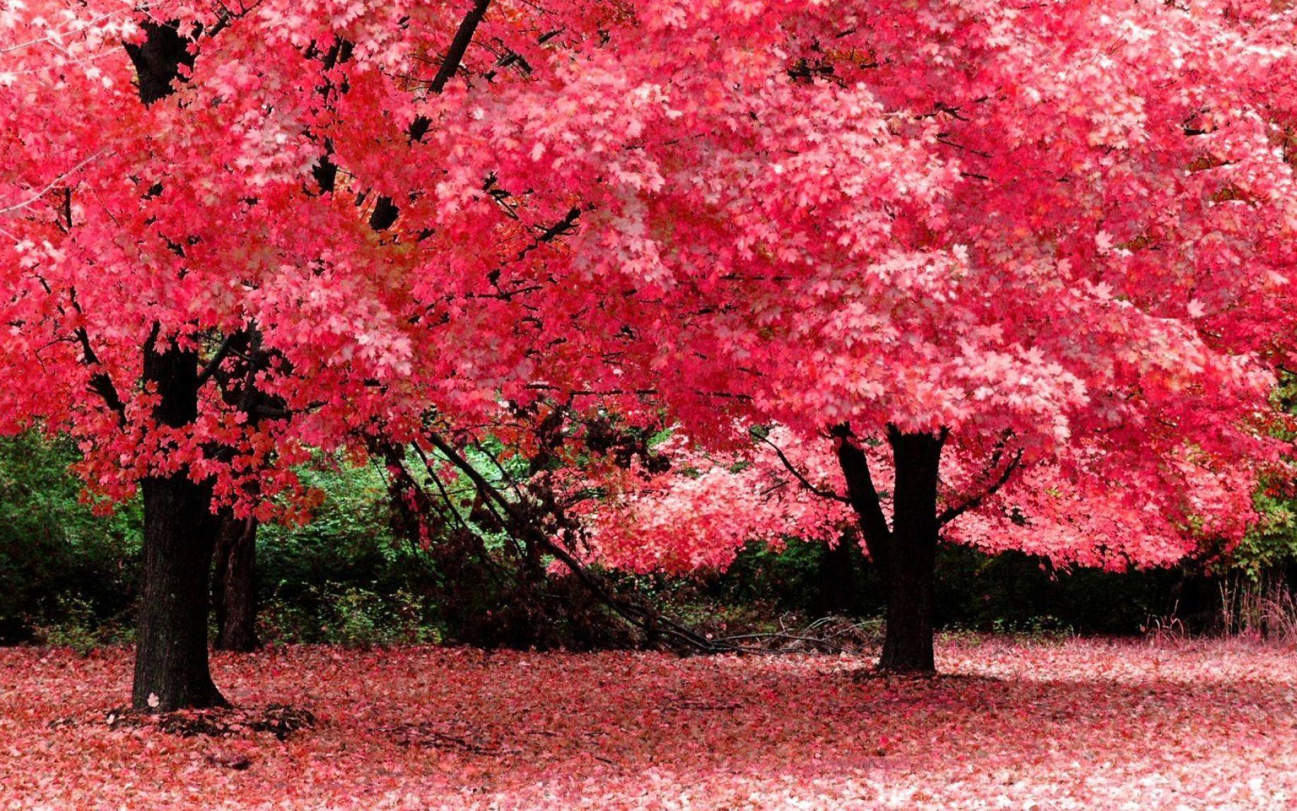Pink Nature Wallpapers - Wallpaper Cave