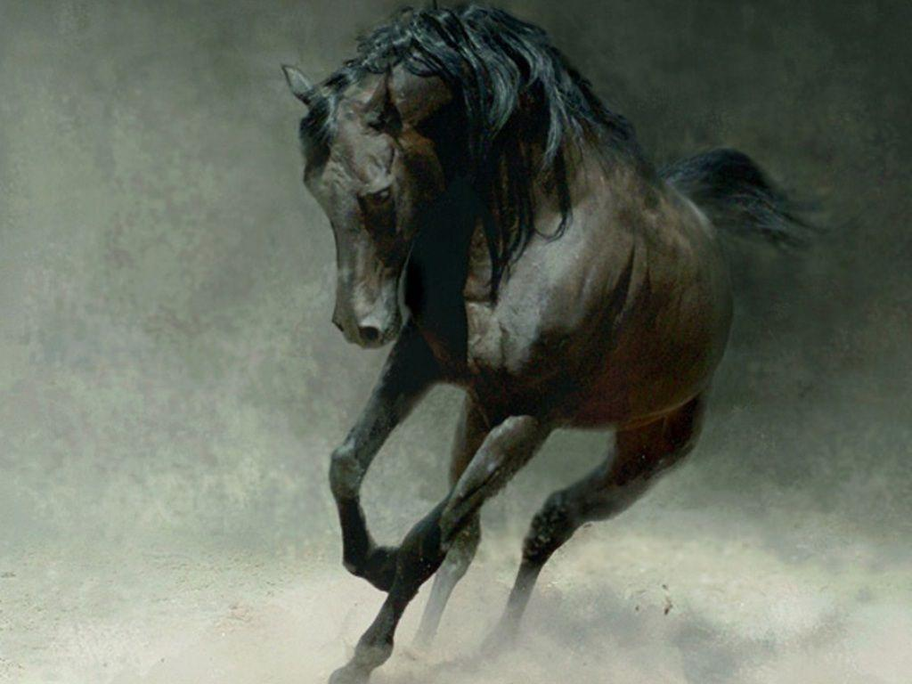 wild horses racing wallpaper - photo #6