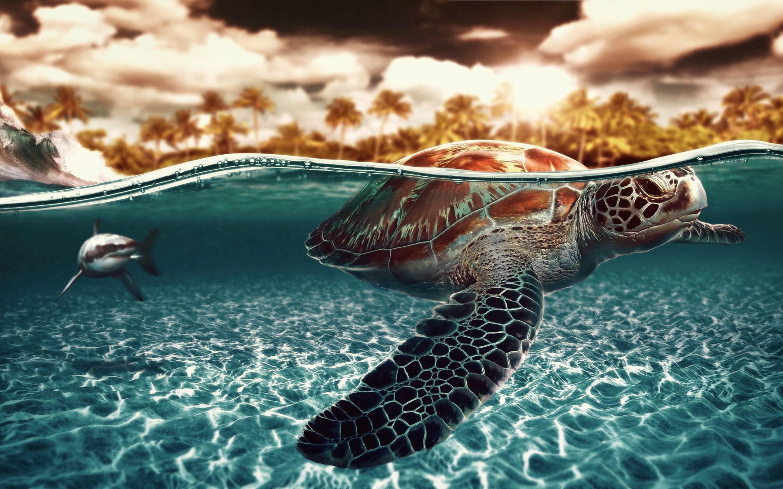 Top 27 Sea Animals Wallpapers In Hd: Sea Turtles Wallpapers