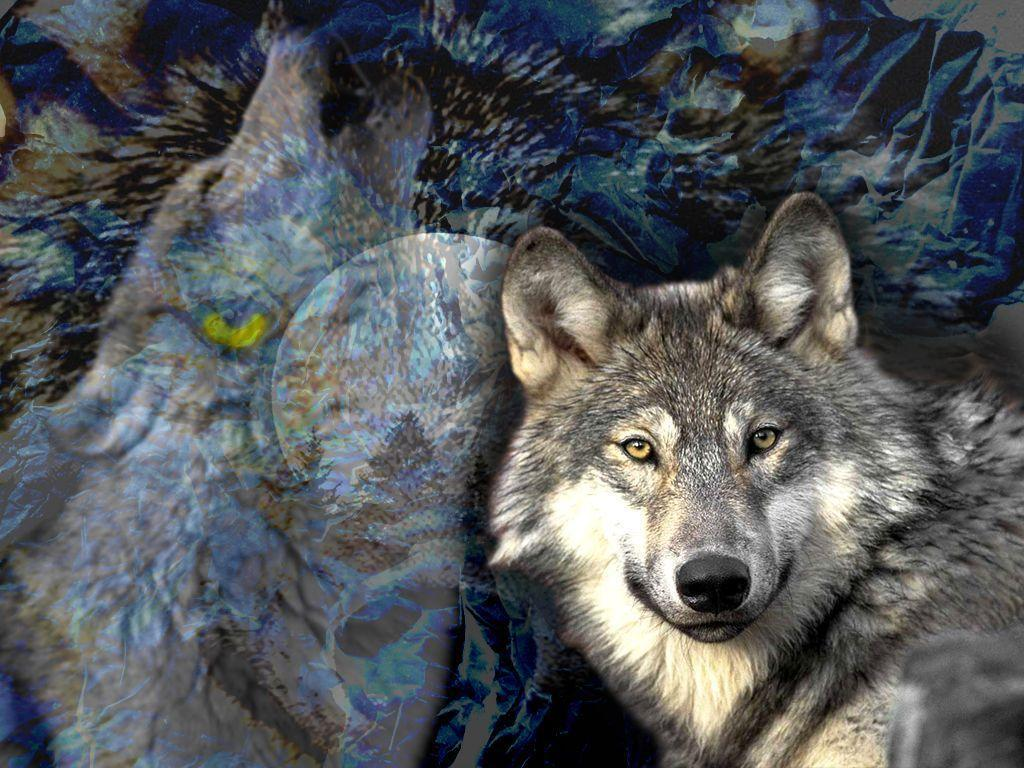 Free Wolf Wallpapers 646 HD Pictures