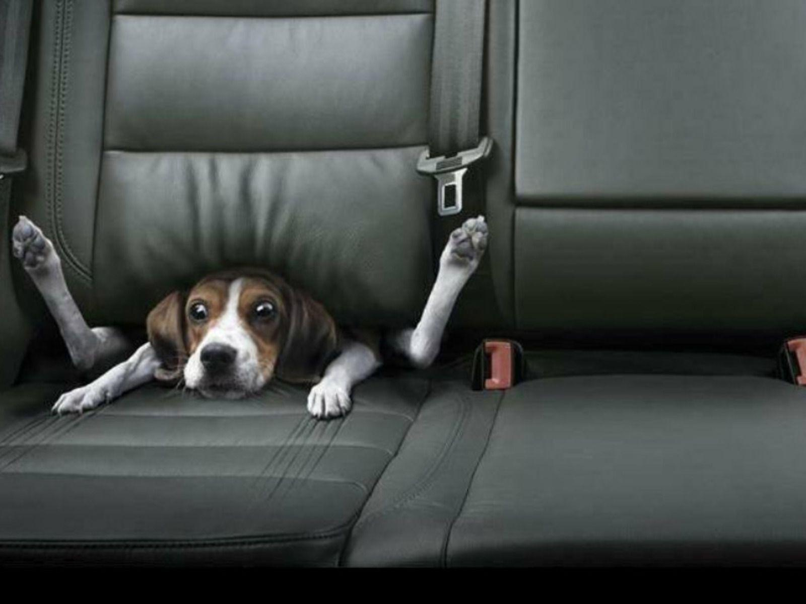 Funny Dog Wallpapers - Wallpaper Cave