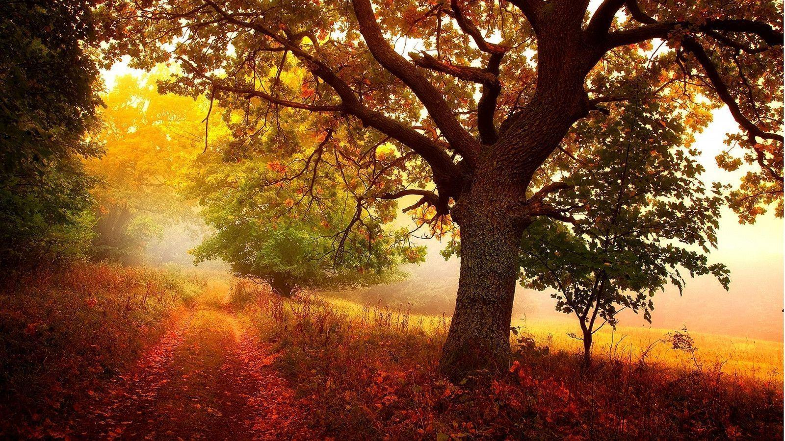 fall woods backgrounds wallpapers - photo #28