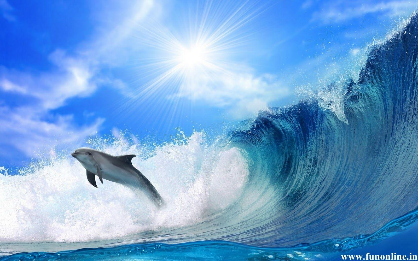 Jumping Dolphin Wallpaper 16 Cool Background 2560x1440 HD ...