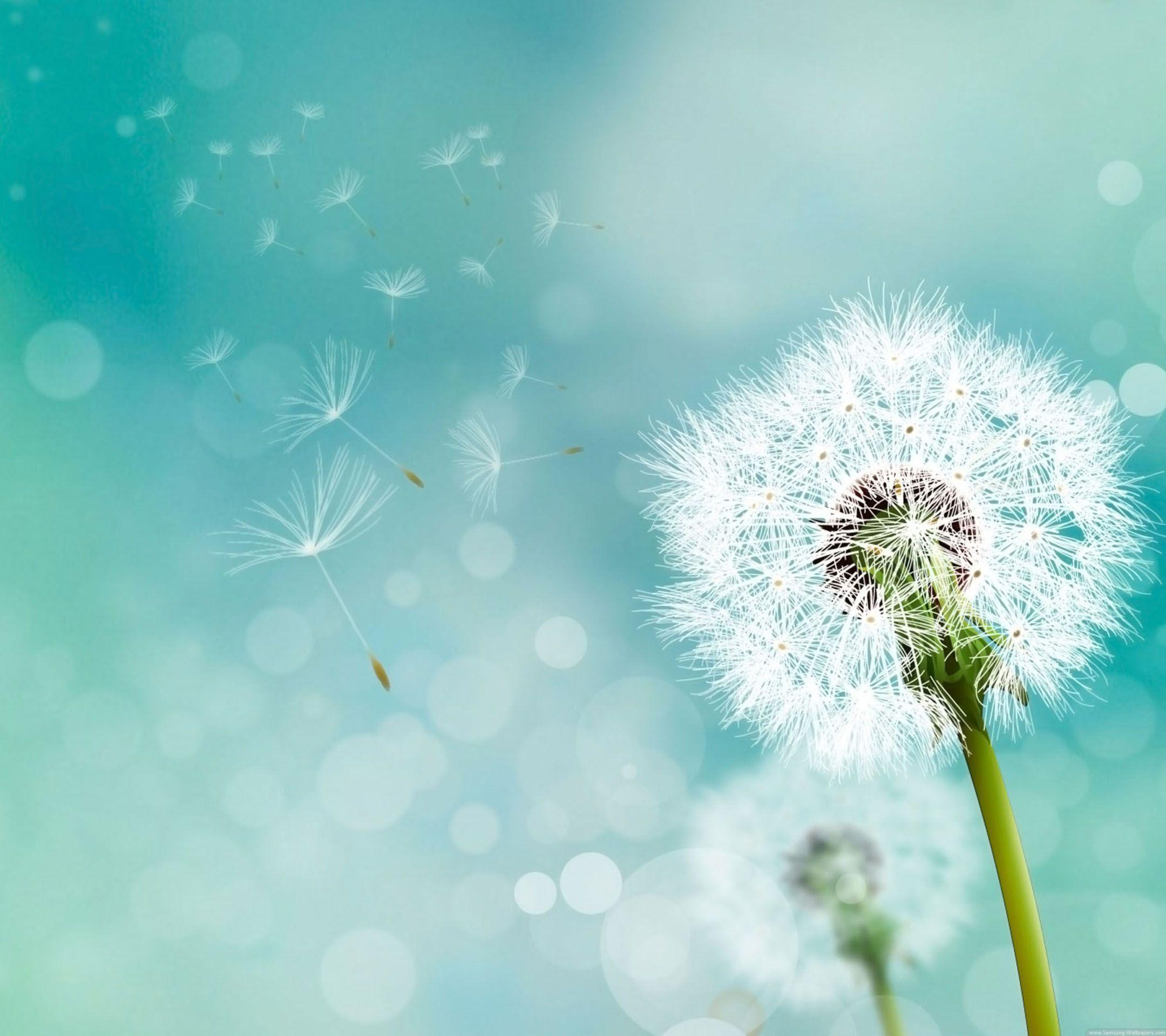 Image For > Blowing Dandelion Wallpapers