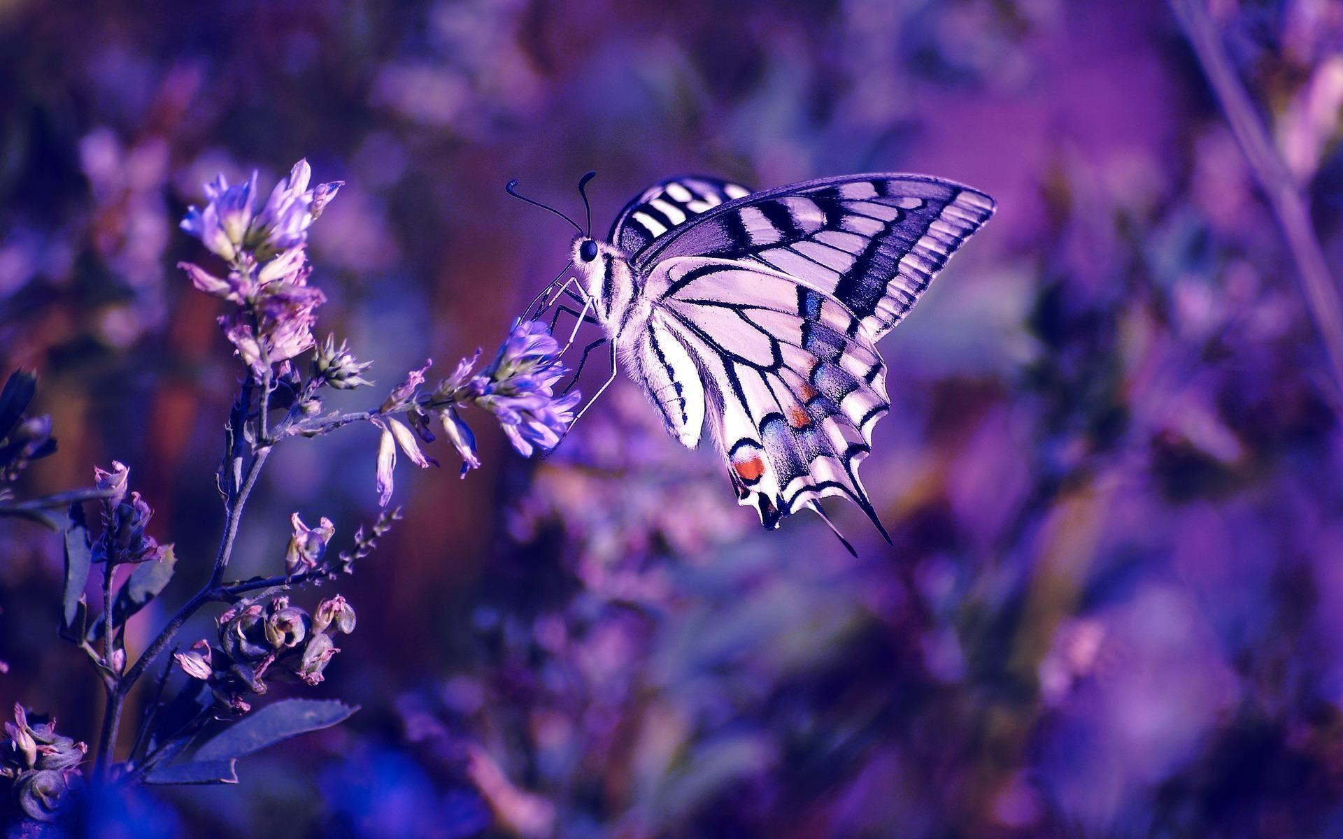 Free Butterfly Backgrounds Wallpaper Cave