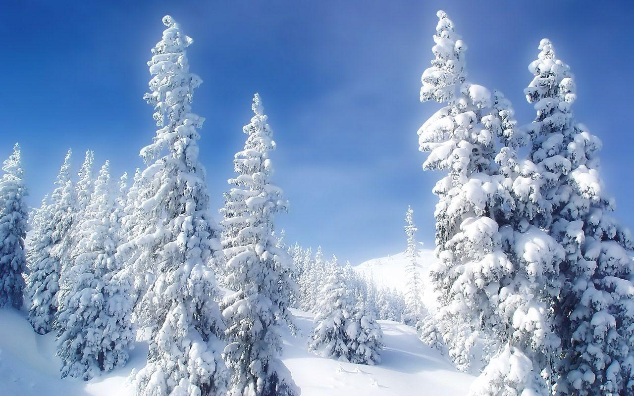 Free Snow Scene Wallpapers For Desktop