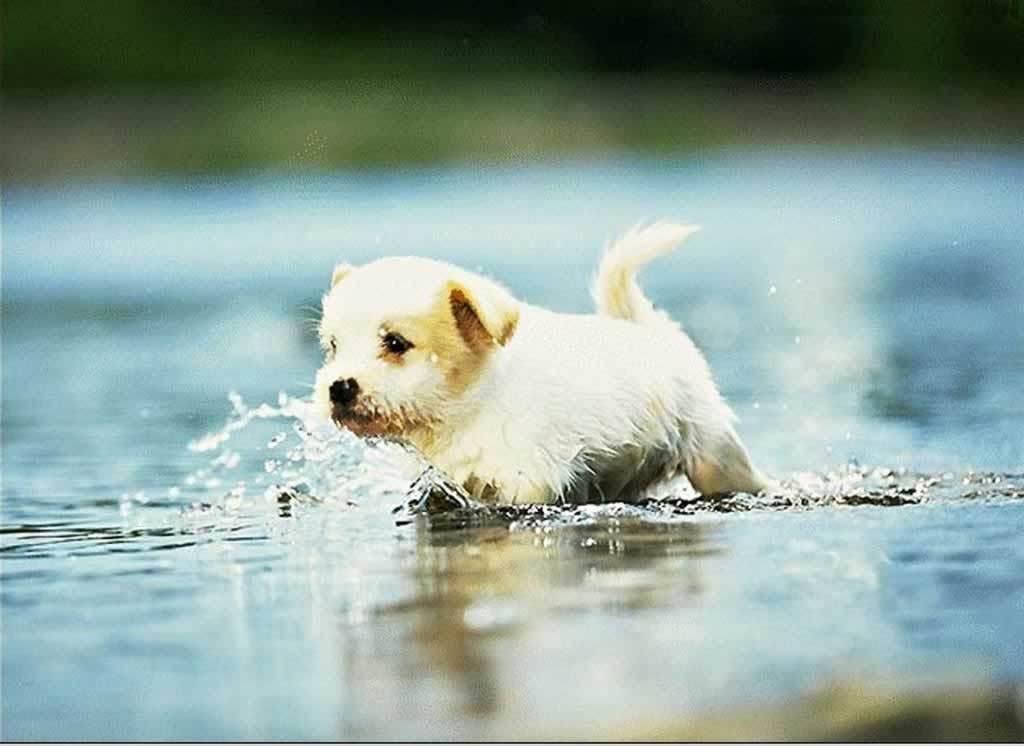 HD Animals: cute dogs and puppies wallpapers