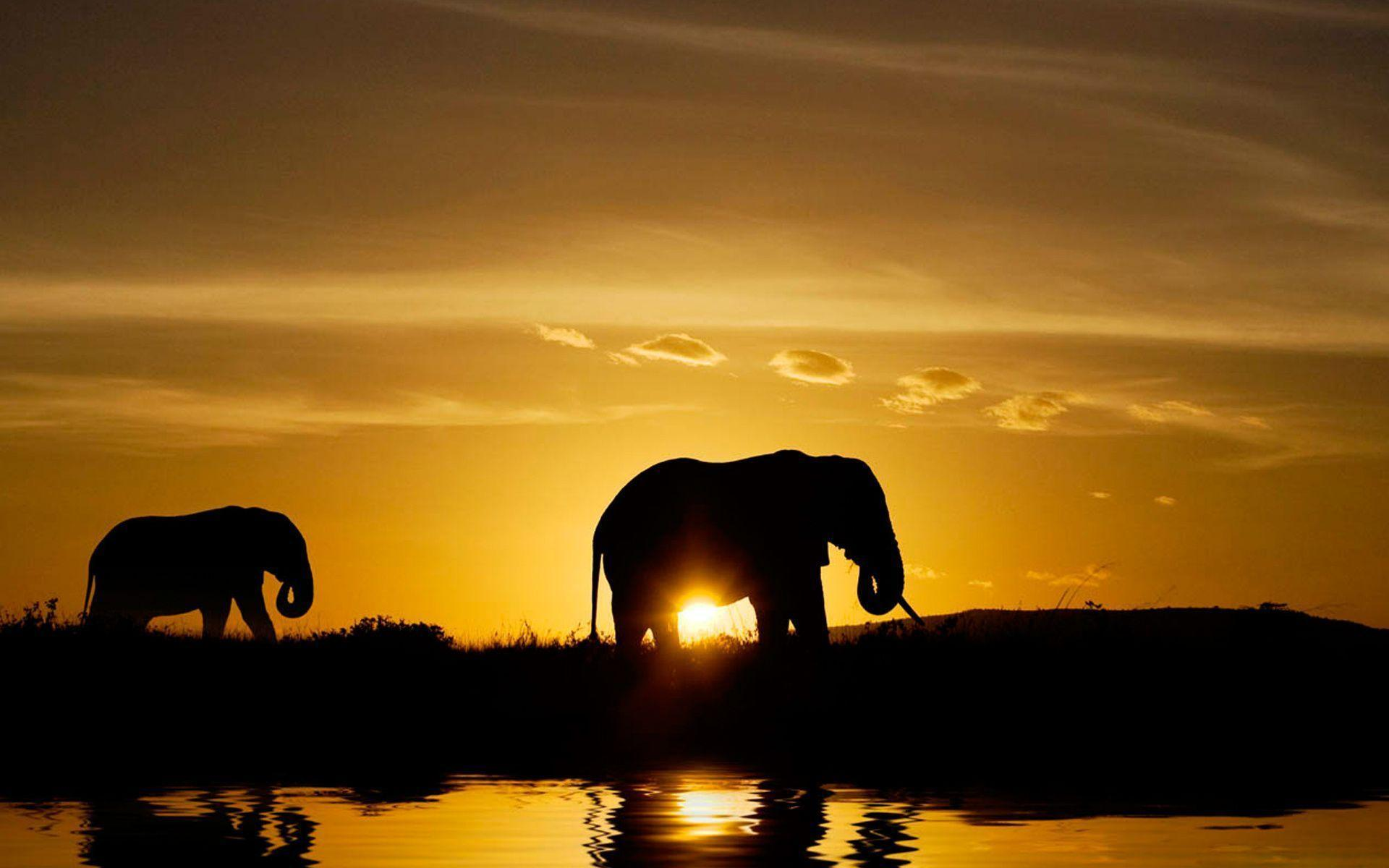 Wild Animals Safari Image Wallpapers