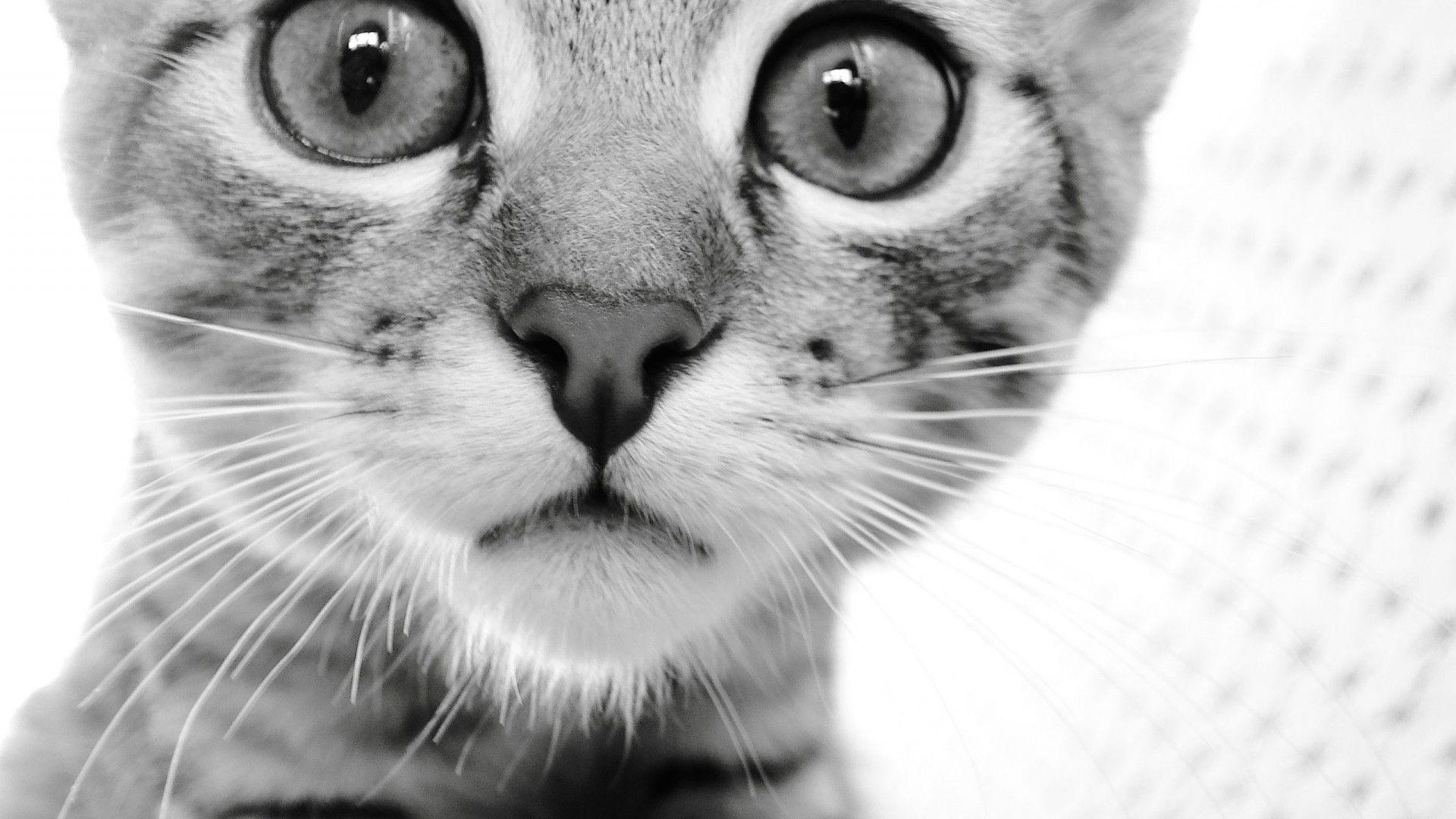 HD Wallpapers 1920x1080 Animals Cat Face Eyes Black White