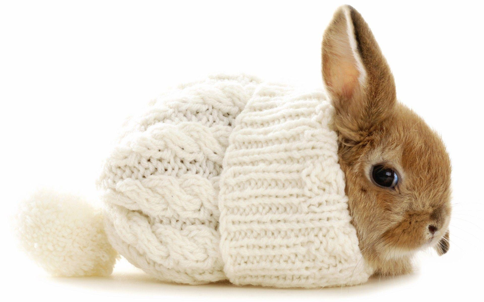 Wallpapers For Cute White Baby Rabbit Wallpaper