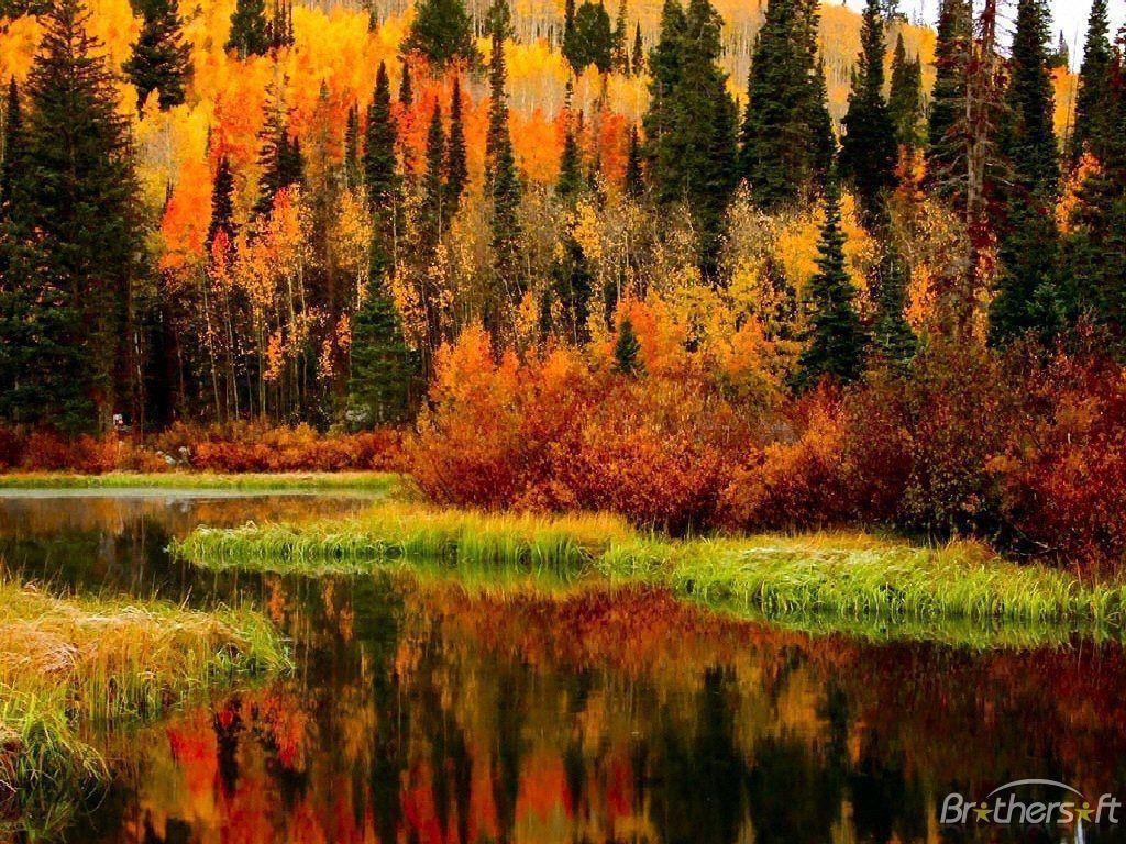 Free Autumn Desktop Screensavers