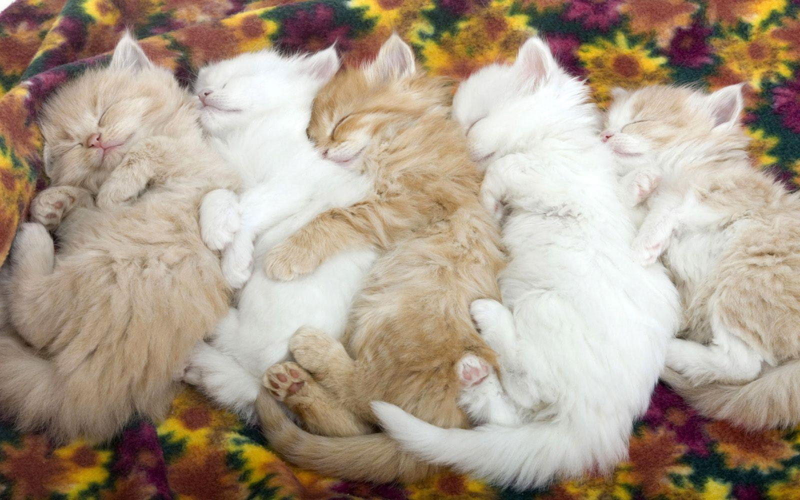 Cute Sleeping Kittens Wallpaper