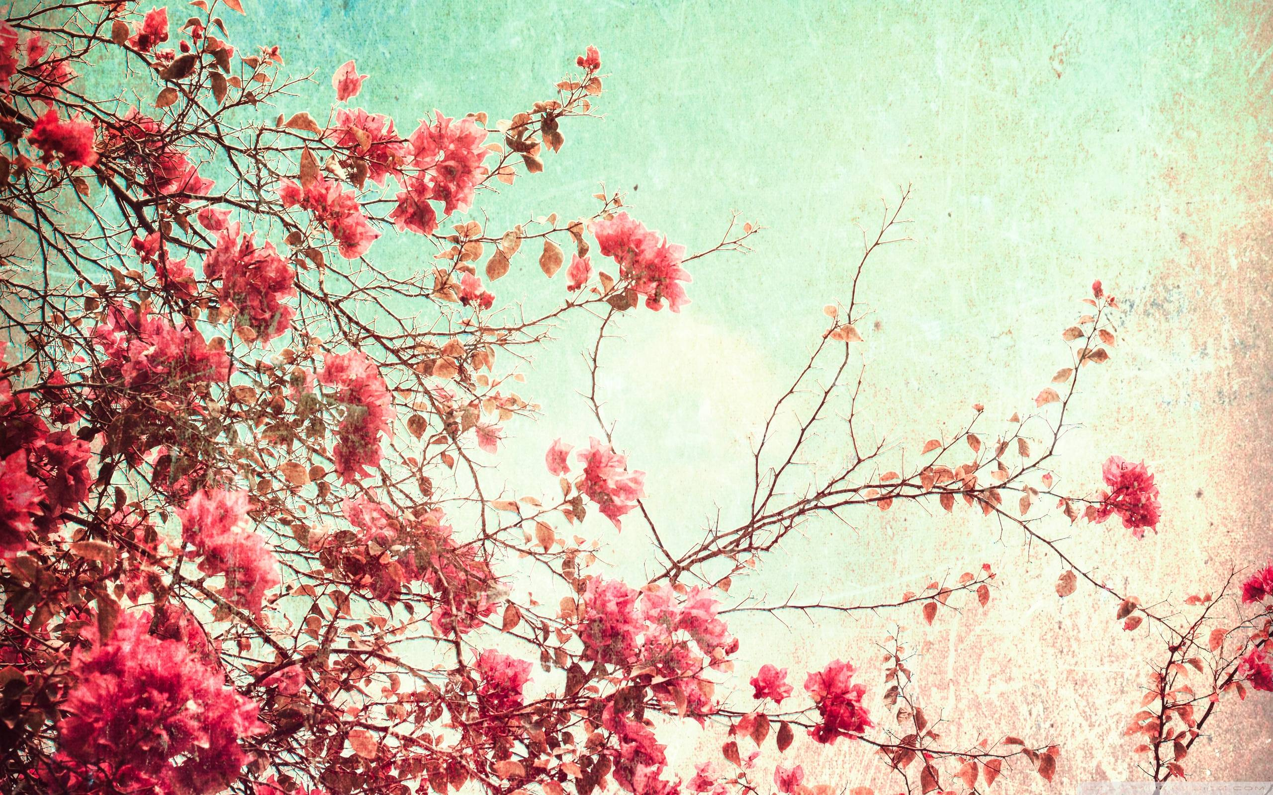 Vintage floral iphone wallpaper tumblr - Desktop Vintage Wallpaper Flowers