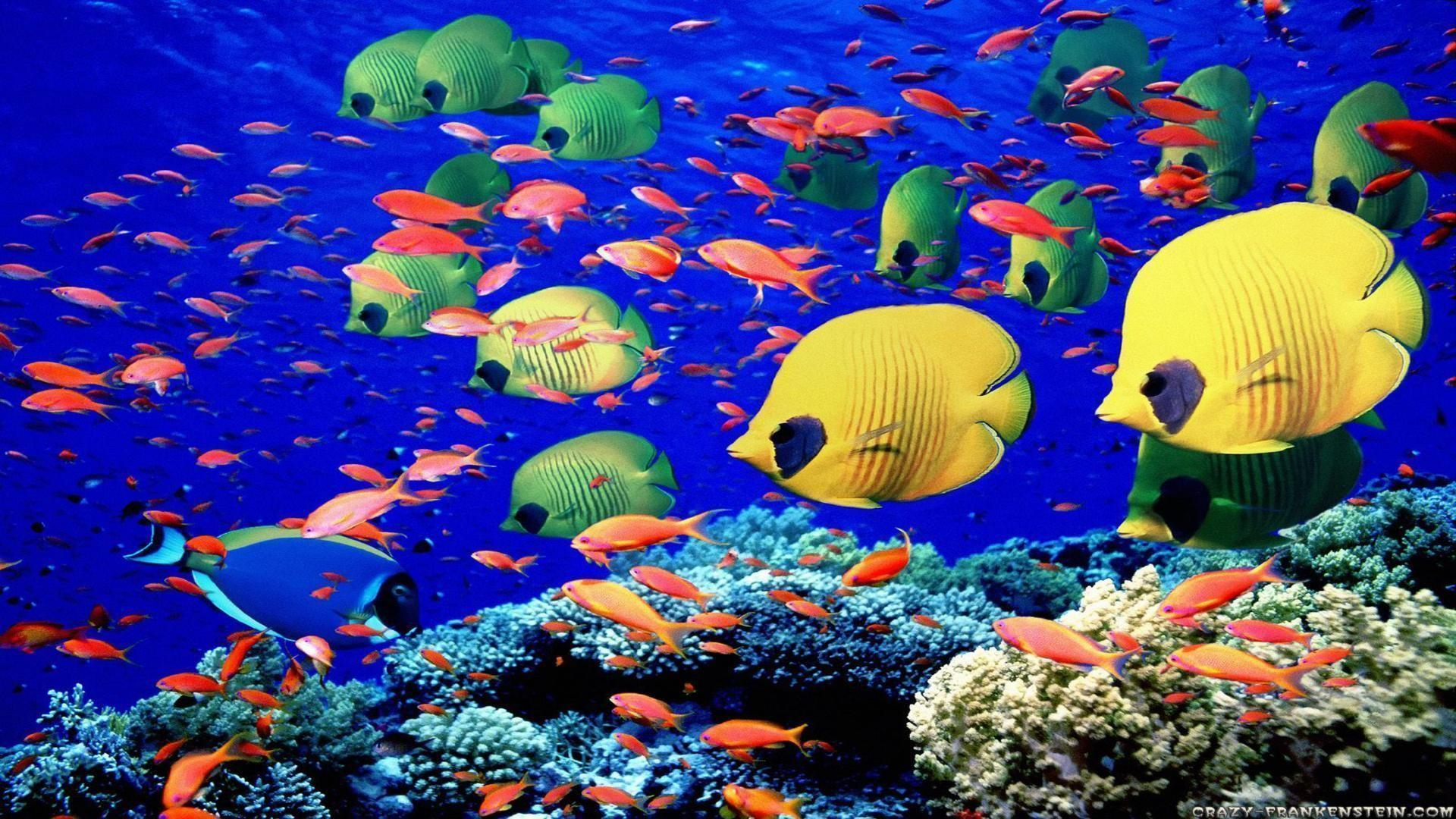 under the sea fish wallpapers - photo #30