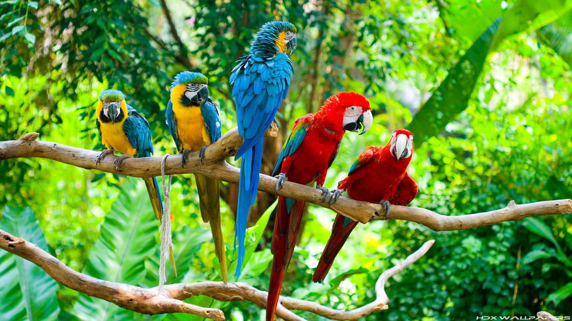 Image For > Blue Macaw Parrot Wallpapers