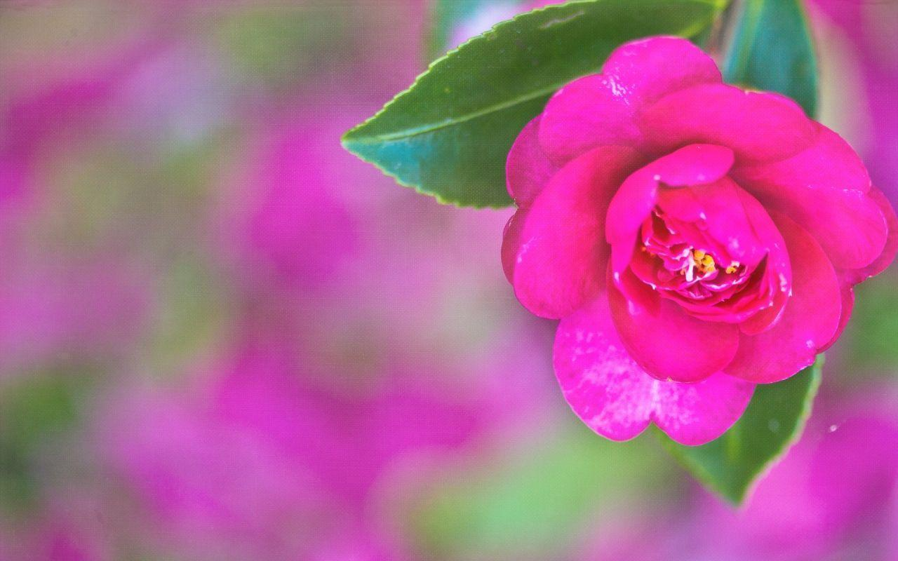 Pretty Pink Backgrounds Wallpaper Cave HD Wallpapers Download Free Images Wallpaper [1000image.com]