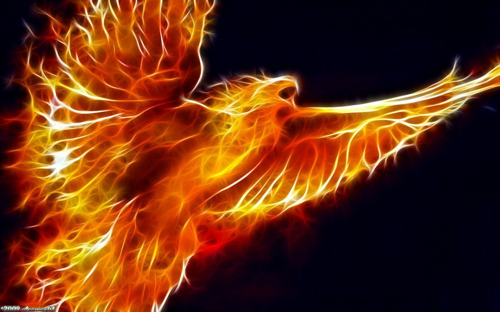 Fire Bird Wallpaper, iPhone Wallpaper, Facebook Cover, Twitter