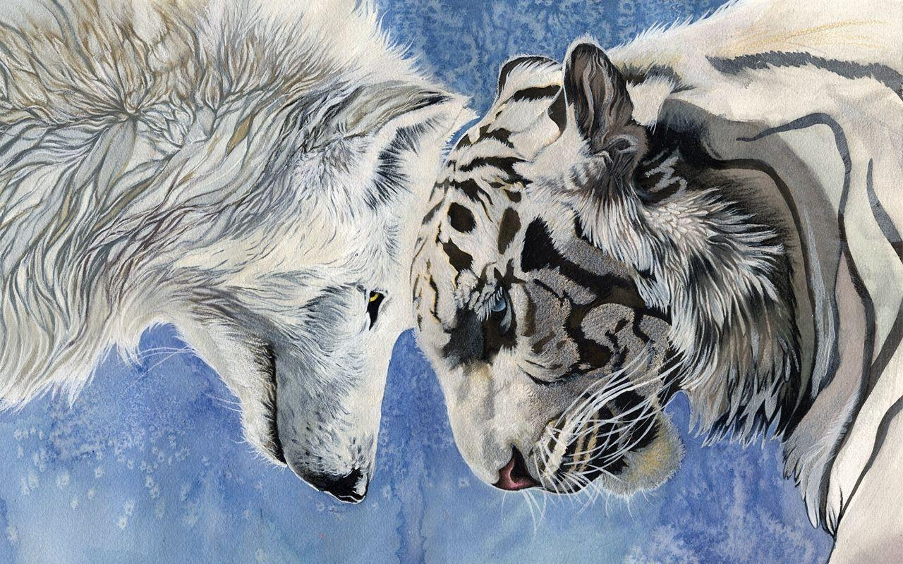 White Wolf Beautiful Wallpapers HD 261 High Definition Wallpapers