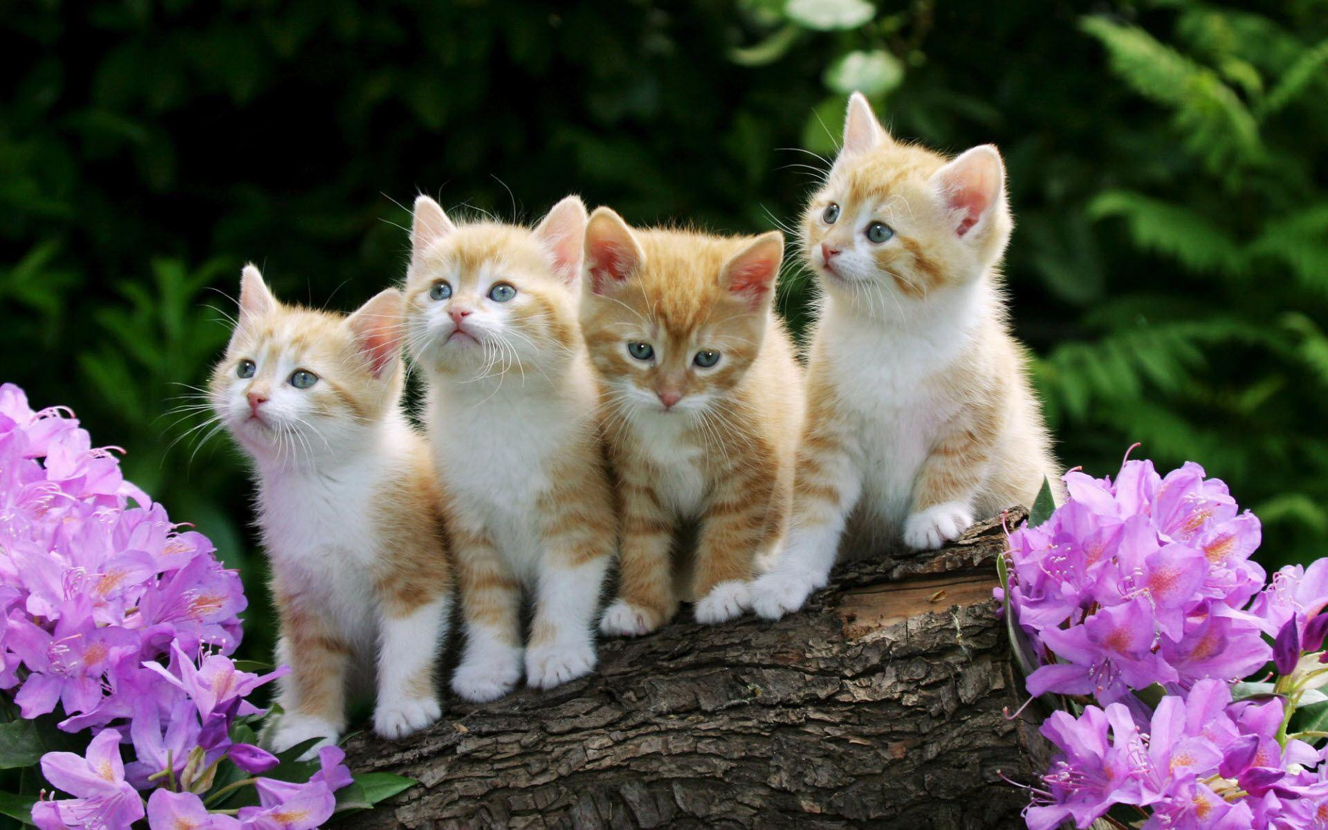 Cute Kittens Wallpapers 9674 Full HD Wallpaper Desktop - Res ...