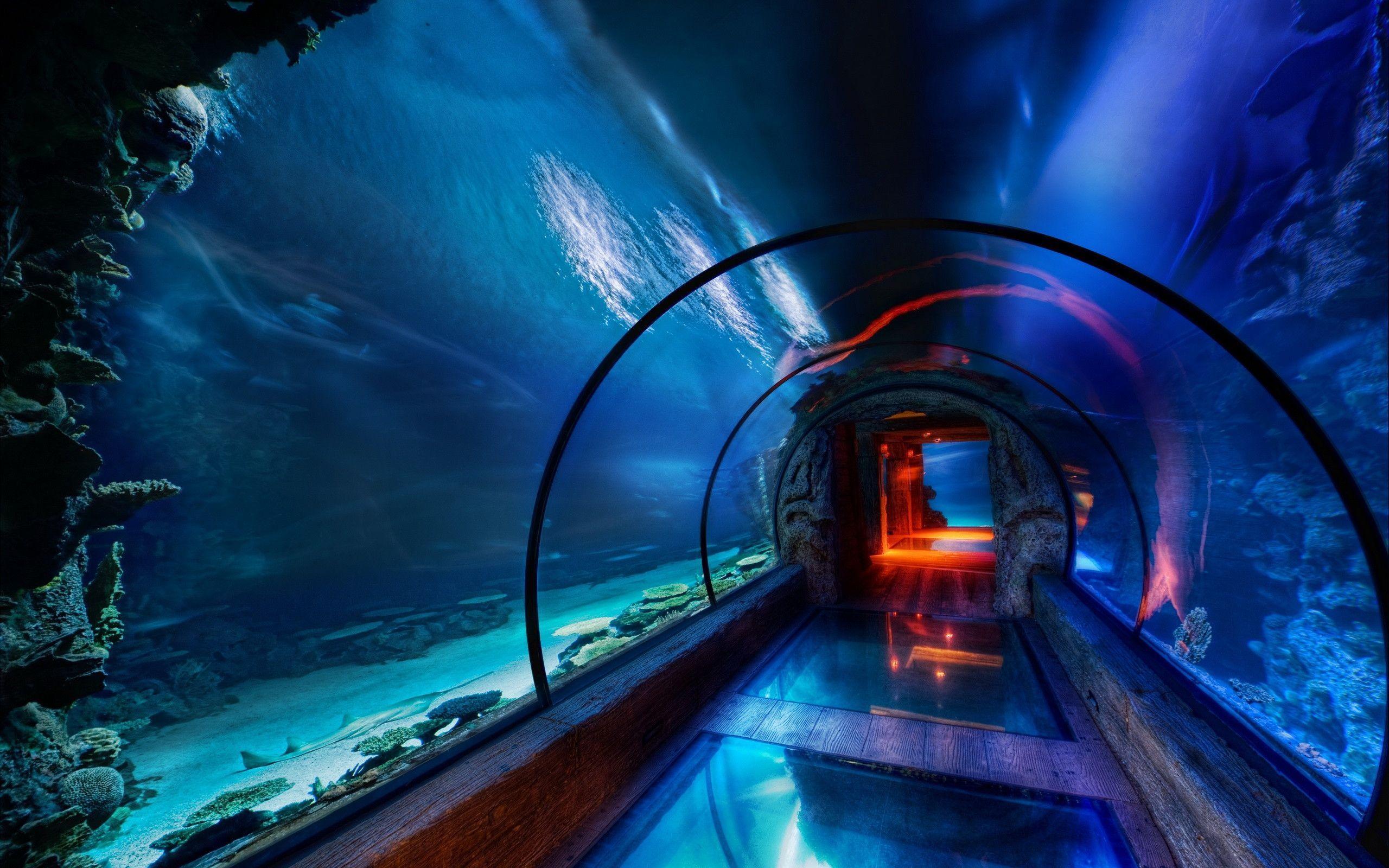 D underwater wallpaper fish and stuffs