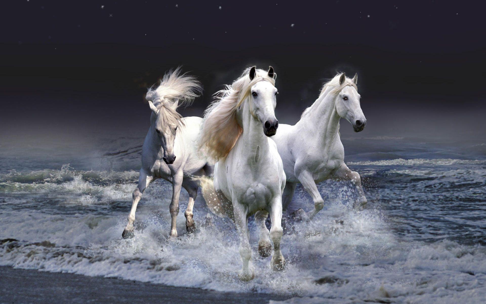 Horse Computer Wallpapers, Desktop Backgrounds 1920x1200 Id: 274780