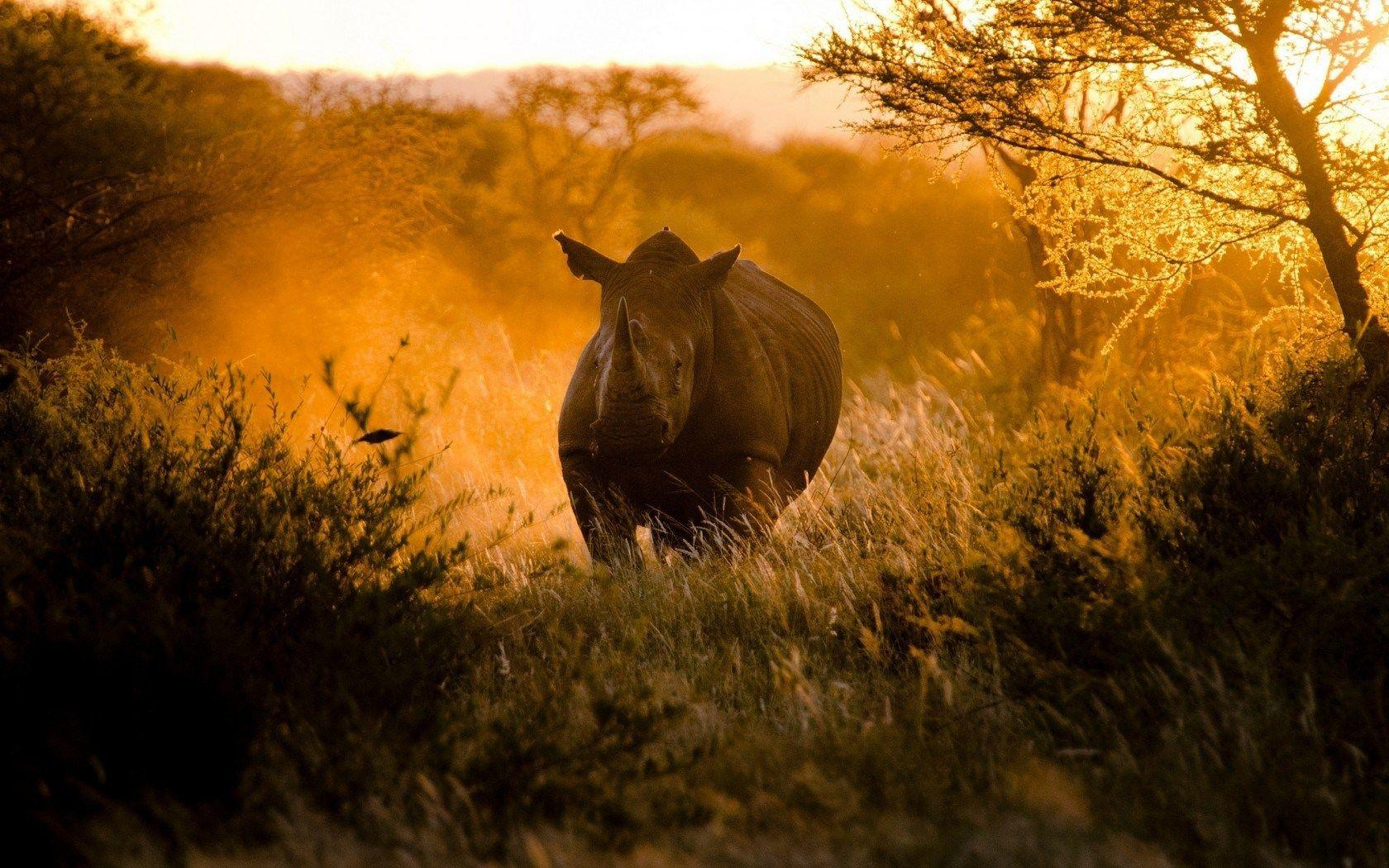 Africa Rhinoceros Running Nature HD Wallpaper - ZoomWalls