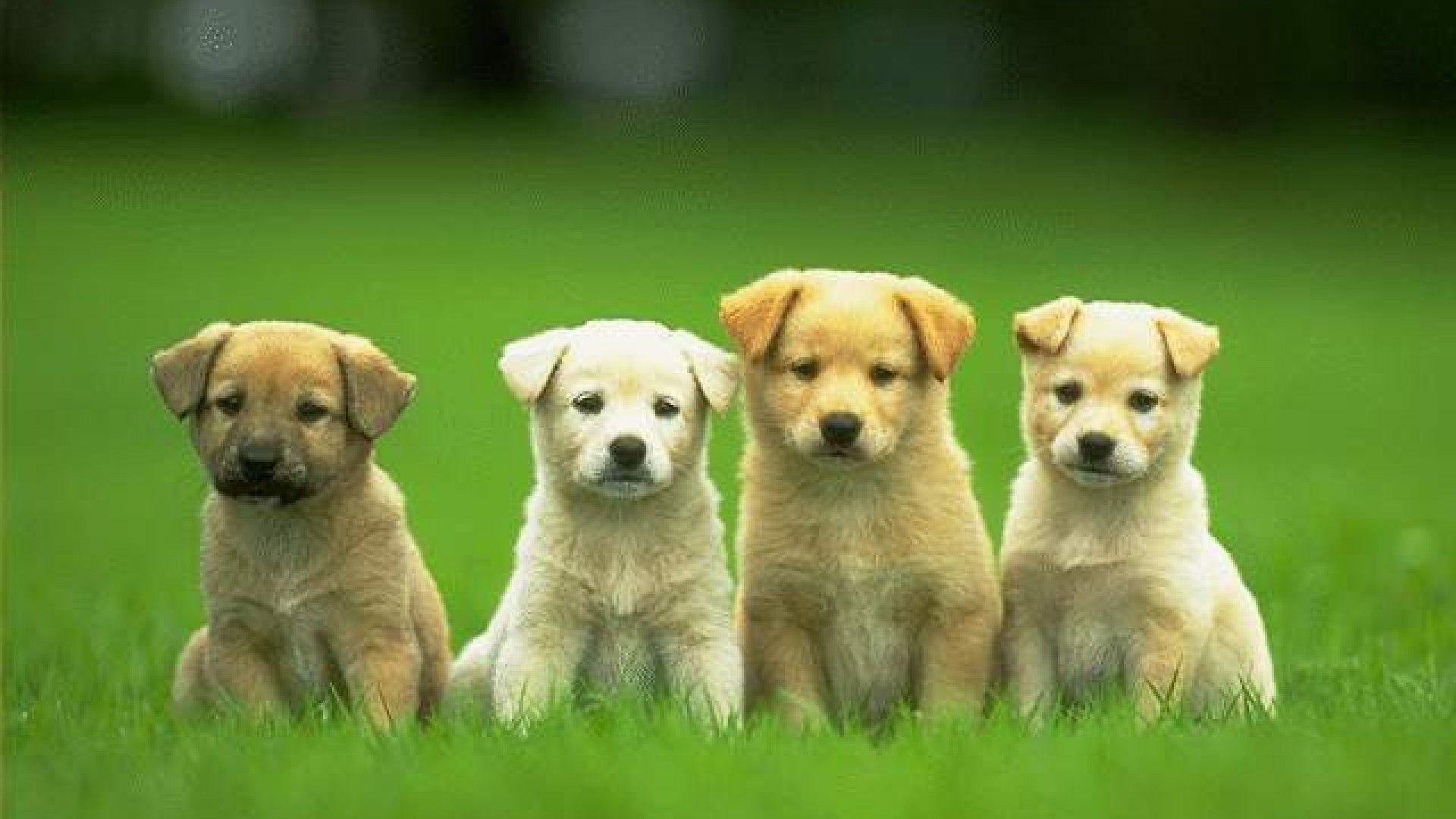 puppies dogs wallpapers dog animal funny cave