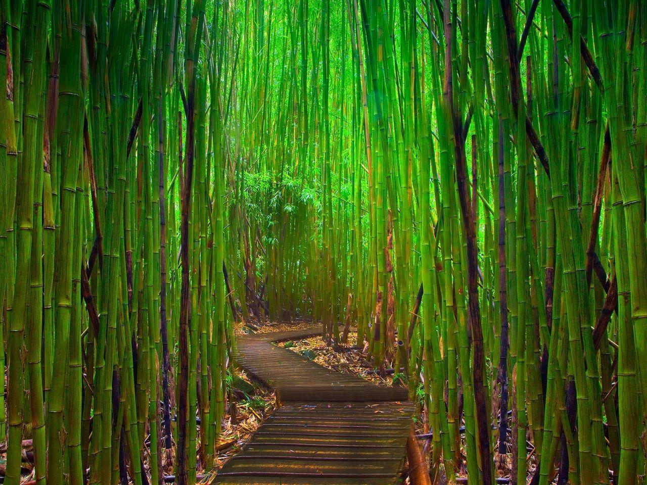 Green Bamboo Wallpapers Wallpaper Cave