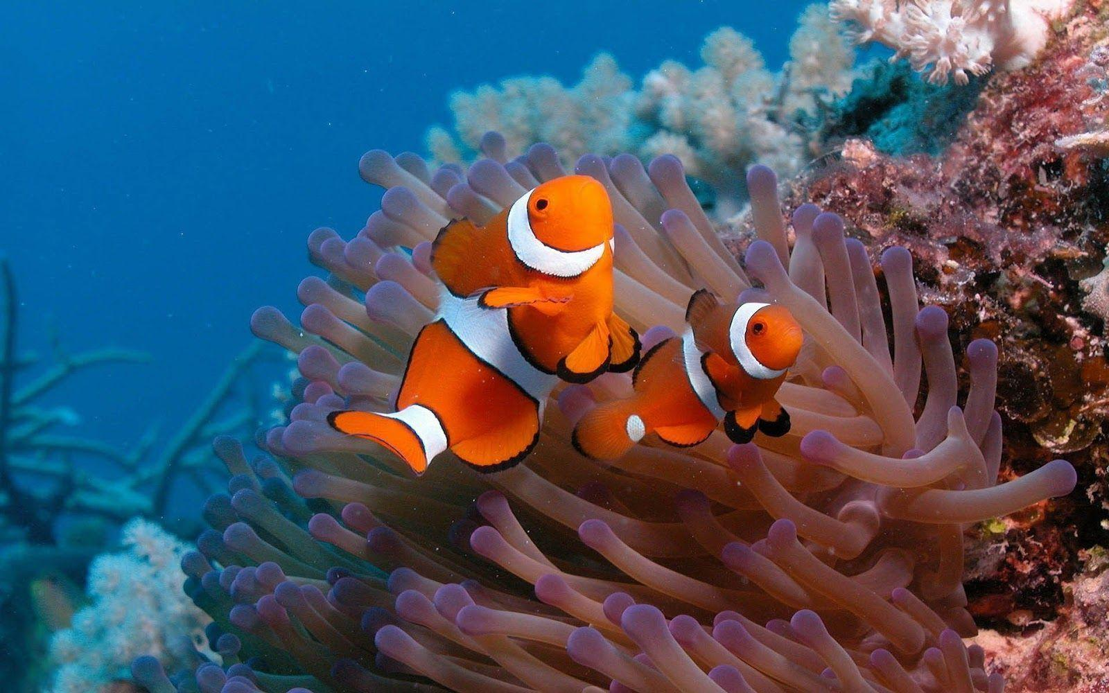 Clown Fish On The Ocean Floor