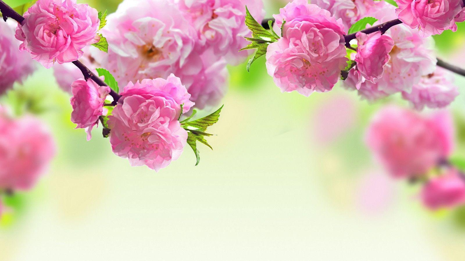 Background flowers ukrandiffusion spring flowers backgrounds desktop wallpaper cave mightylinksfo