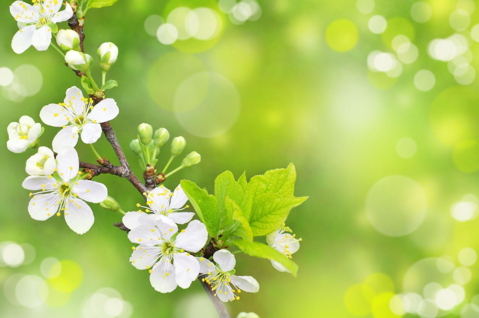 free wallpapers for desktop spring – 1920×1275 High Definition