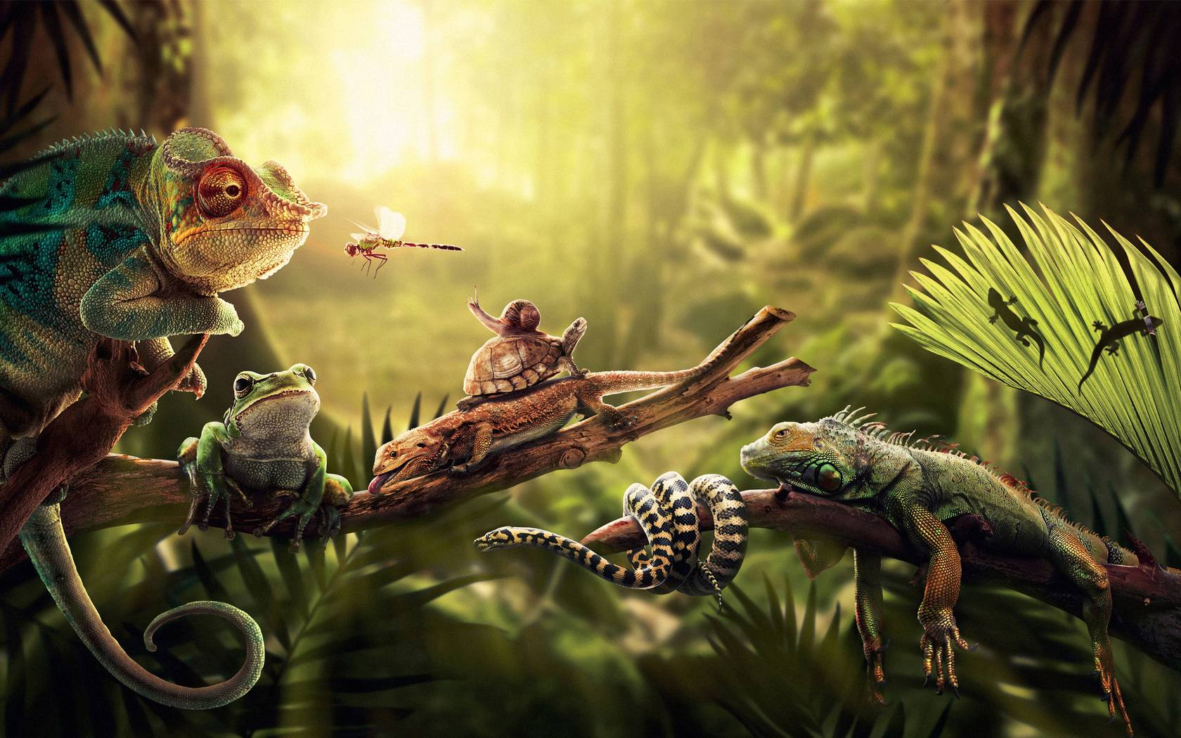 Reptile wallpapers wallpaper cave for 3d wallpaper for home amazon