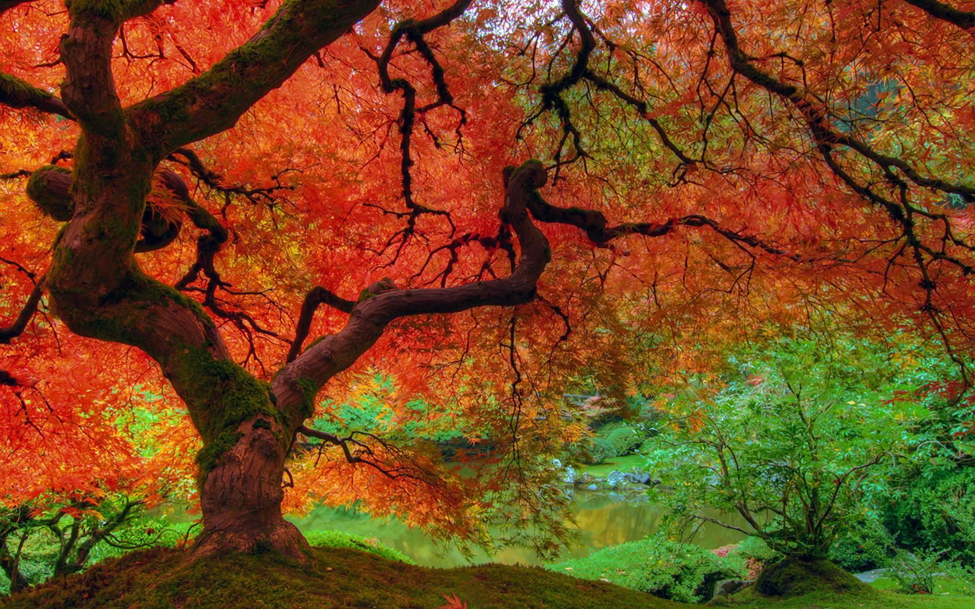 fall colors desktop wallpaper www