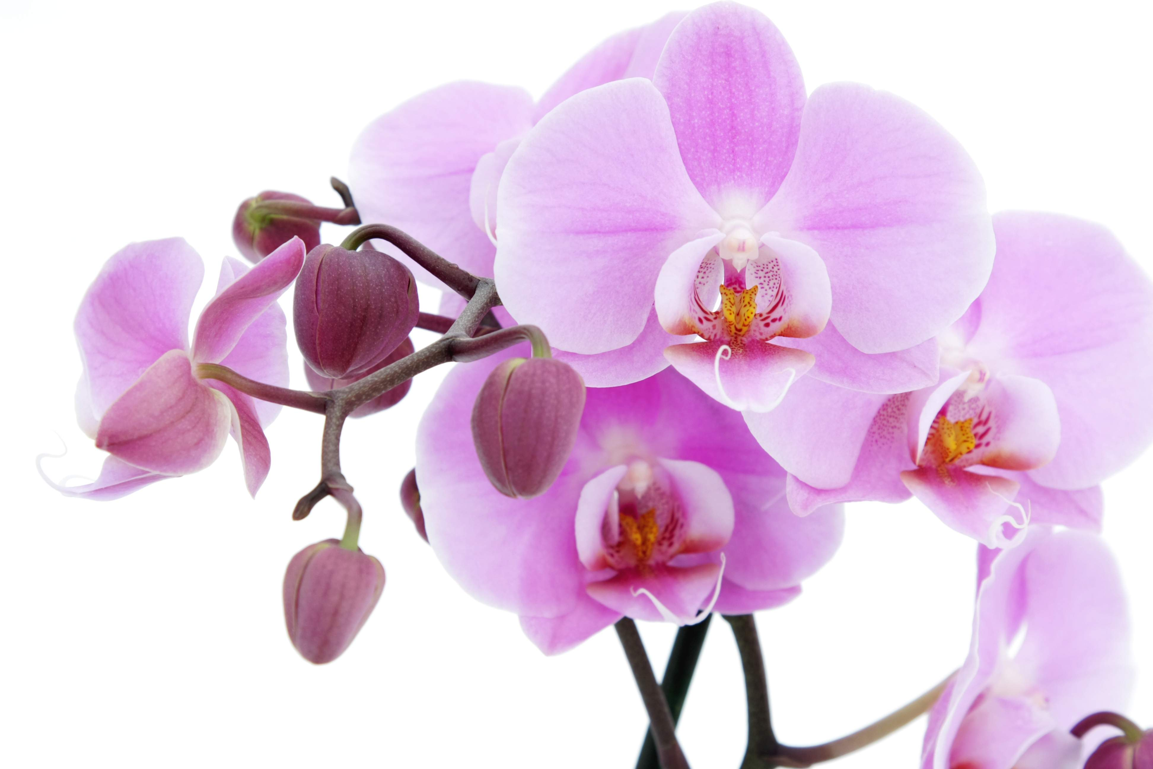 Orchid flower wallpapers wallpaper cave - White orchid flowers desktop wallpapers ...