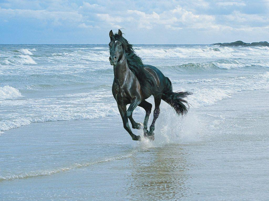 3d Horse Wallpapers Wallpapers Gallery