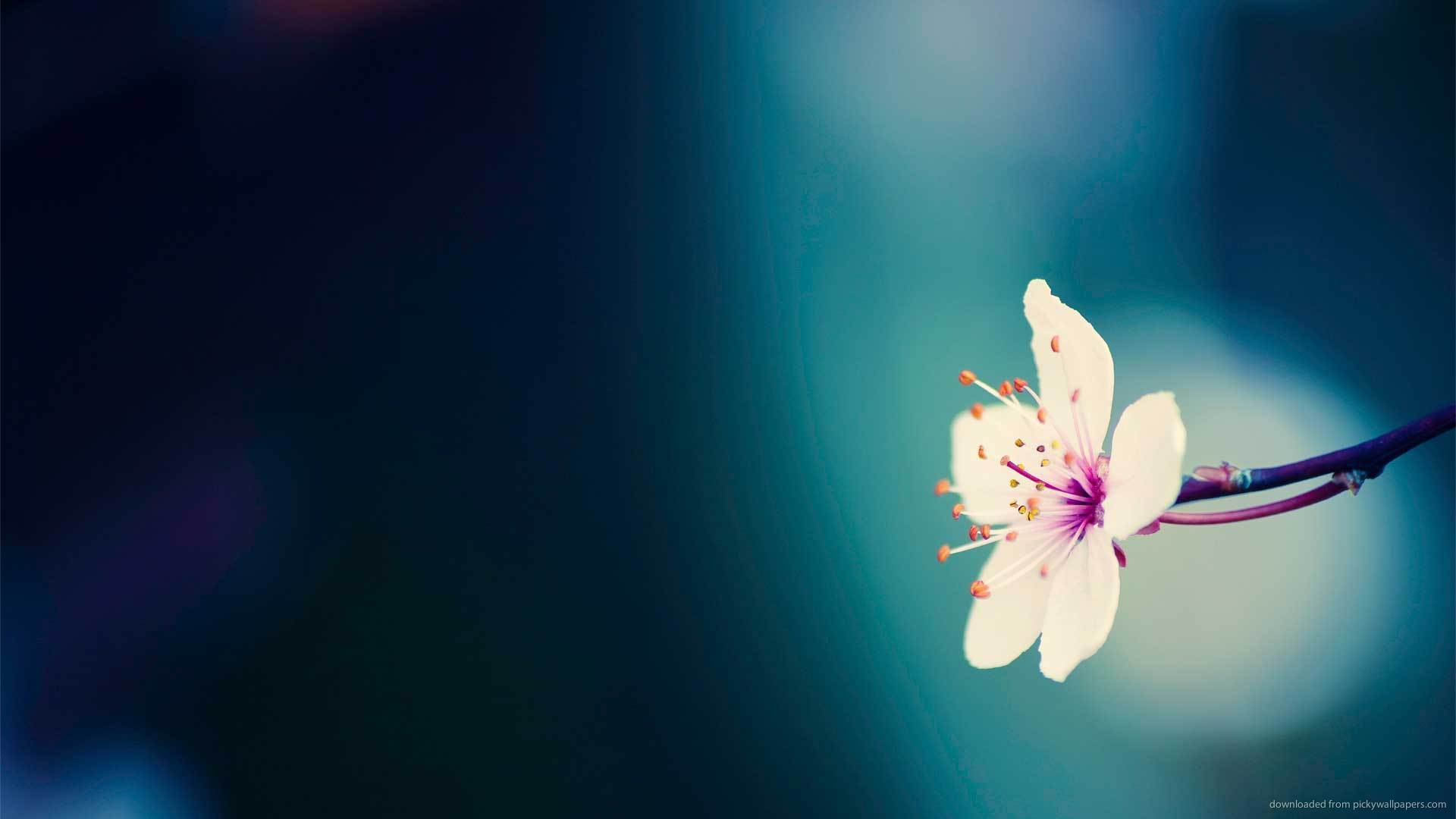 flowers spring wallpaper 1920x1080 - photo #25
