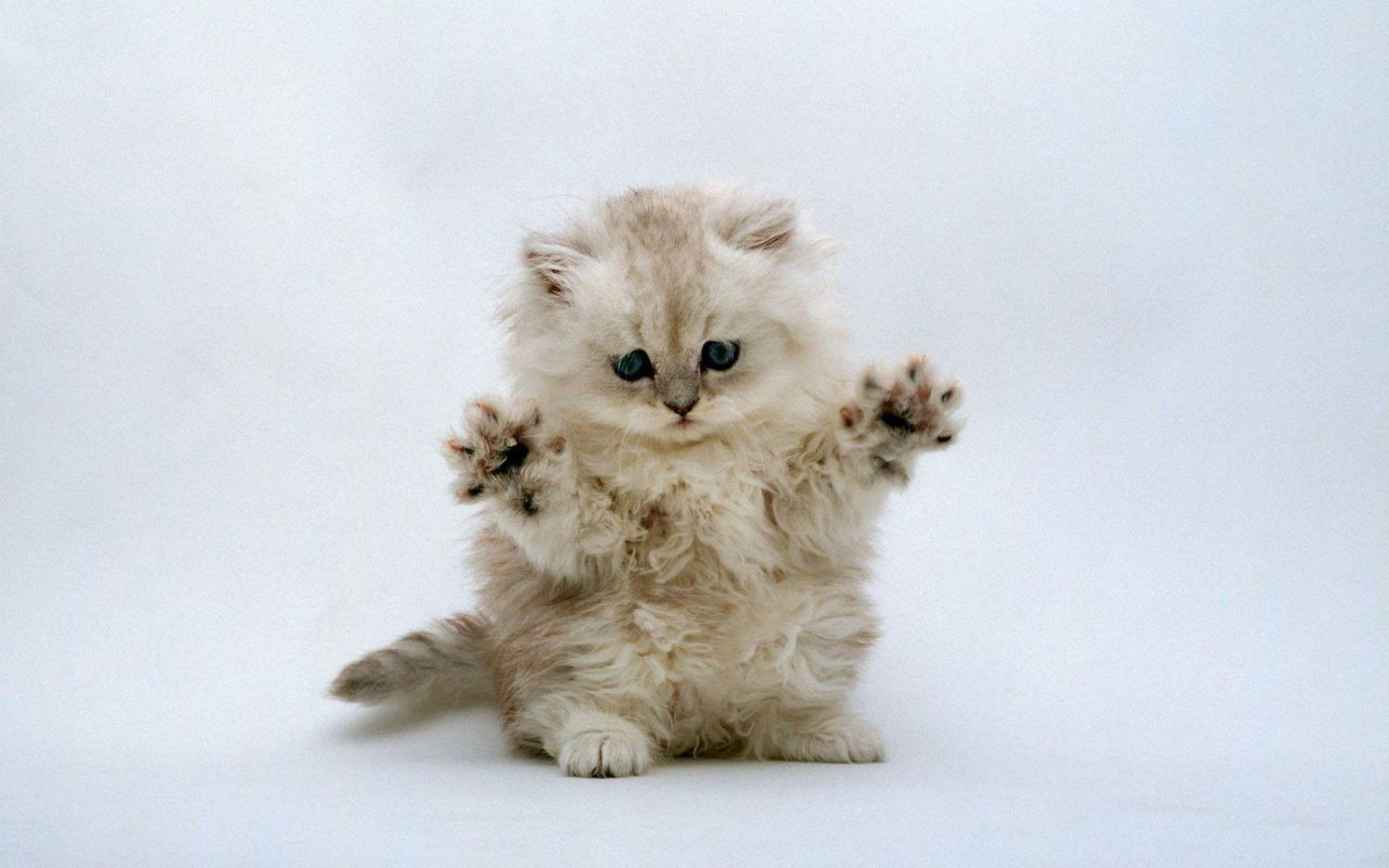 Cute Kitten Wallpapers HD Android Apps on Google Play