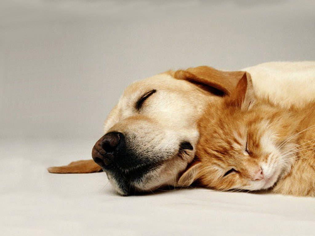 Animals kitten puppy <b>cat dog wallpaper</b>   1920x1440   45681 ...