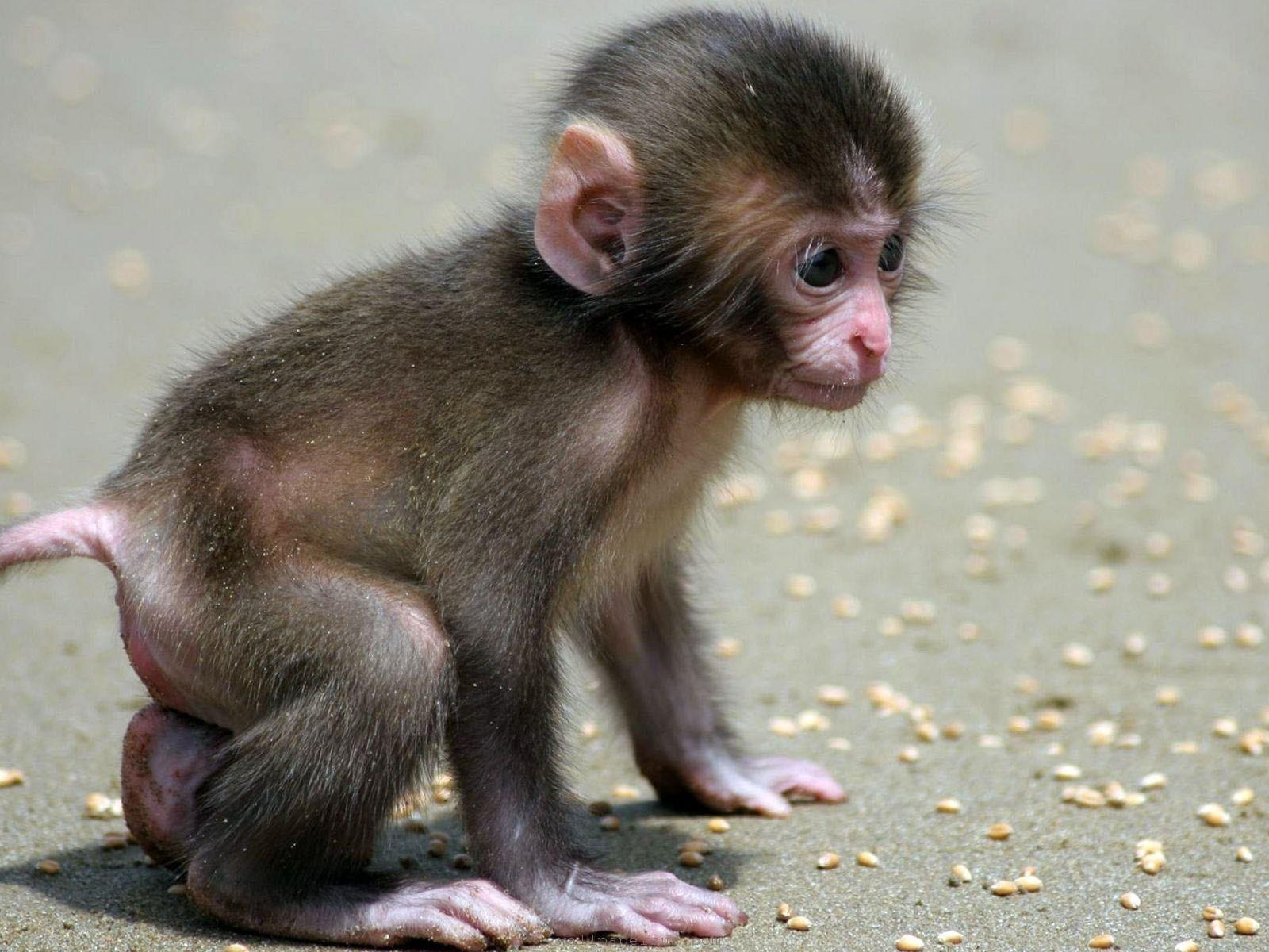 Baby Animal Wallpapers - Wallpaper Cave