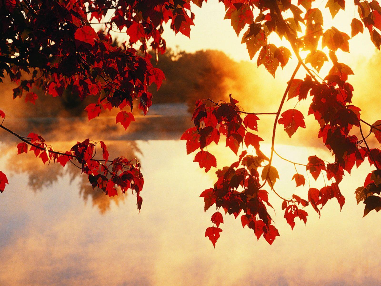 Light Beam Autumn Fall Wallpaper   HD Wallpapers & HD Backgrounds ...